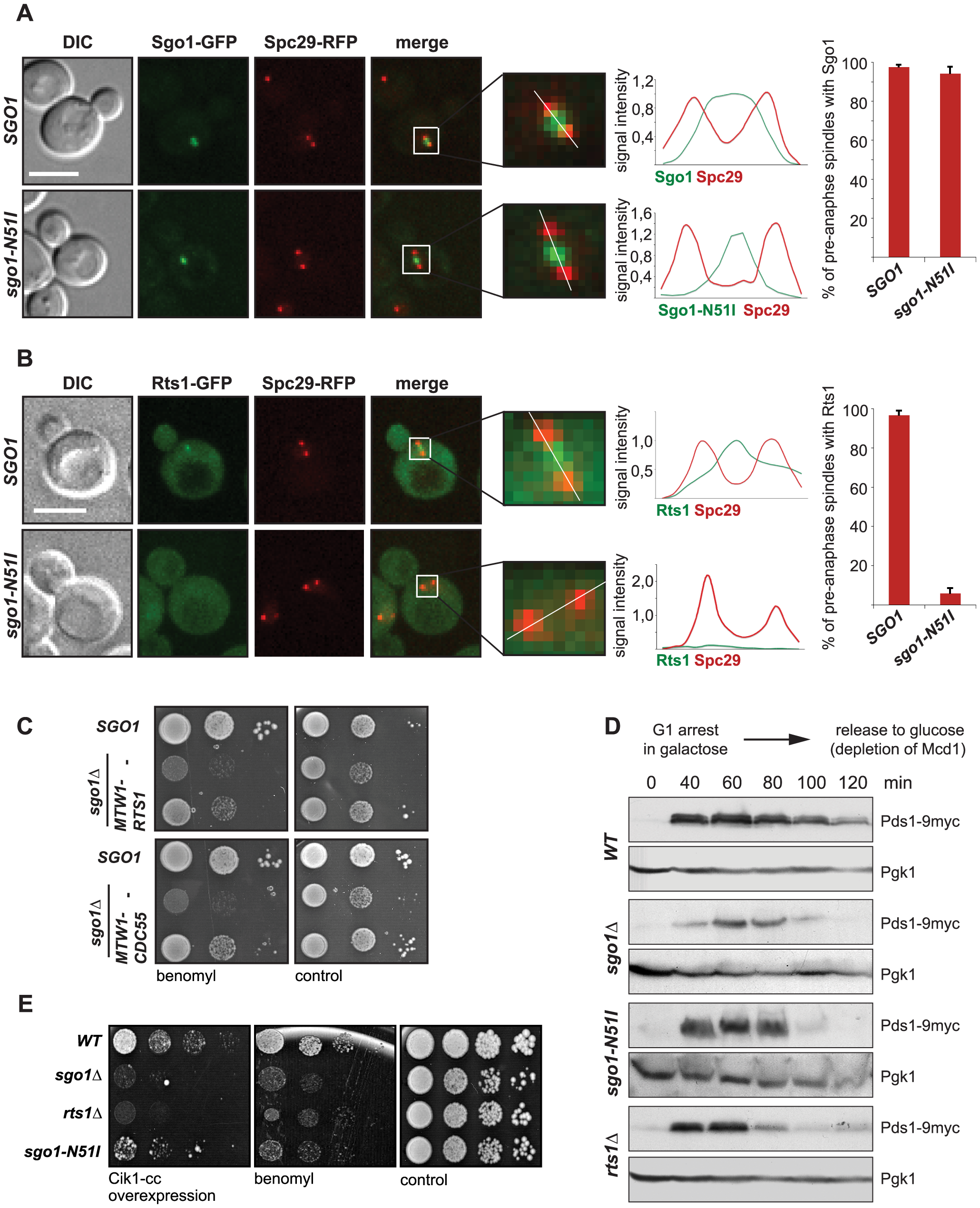 Sgo1-mediated PP2A recruitment to the centromere is essential for tension sensing.