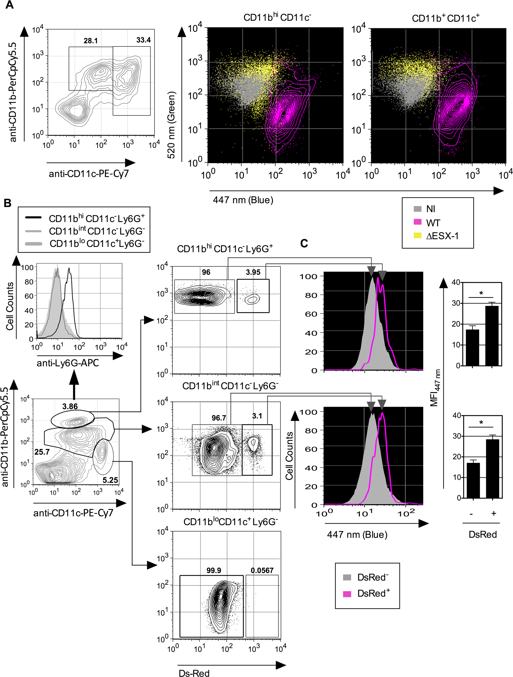 <i>Mtb</i>-mediated phagosomal rupture in different cell subsets <i>ex vivo</i> and <i>in vivo</i>.