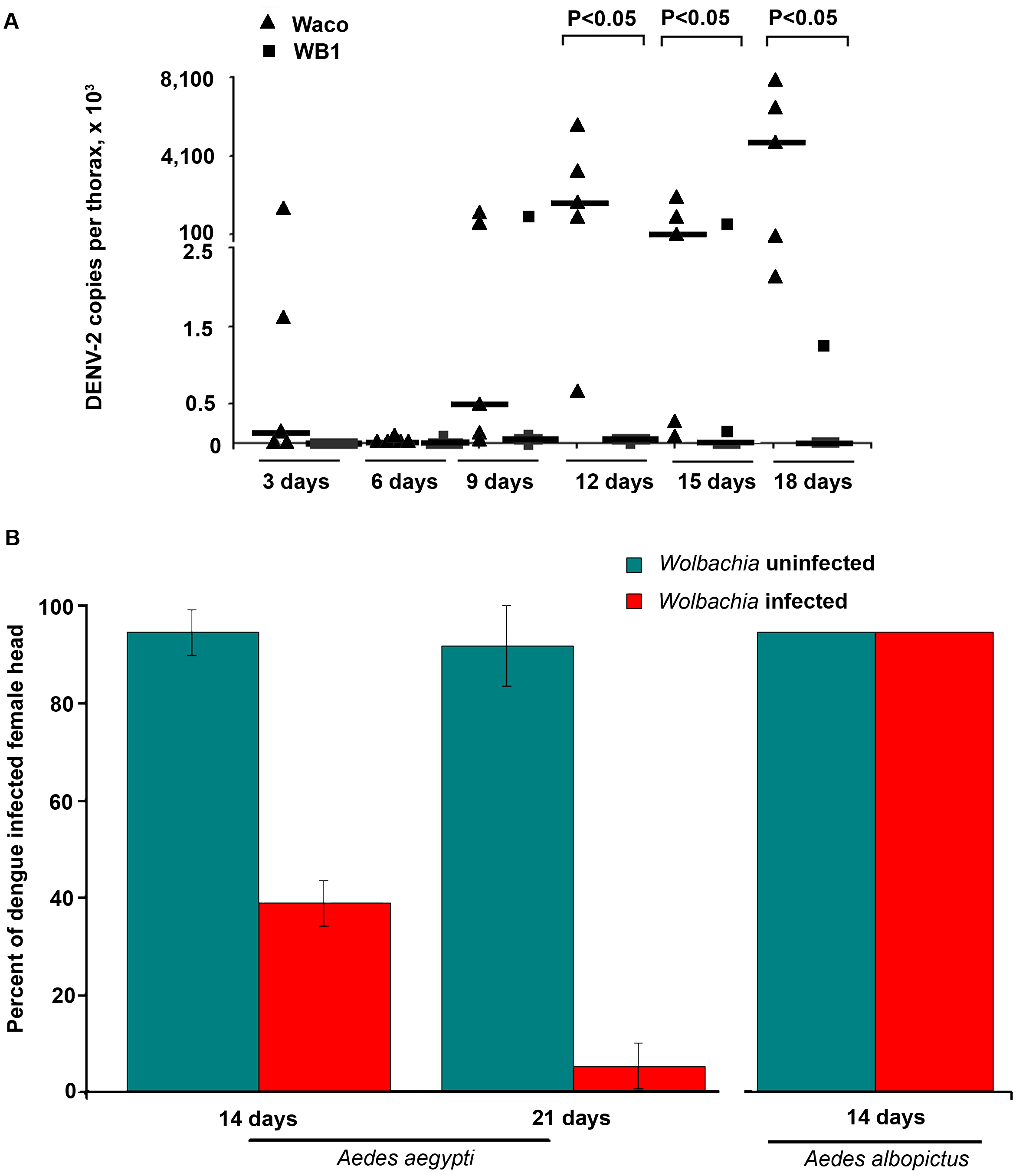 Inhibition of dengue dissemination to the mosquito thorax and head by <i>Wolbachia</i>.