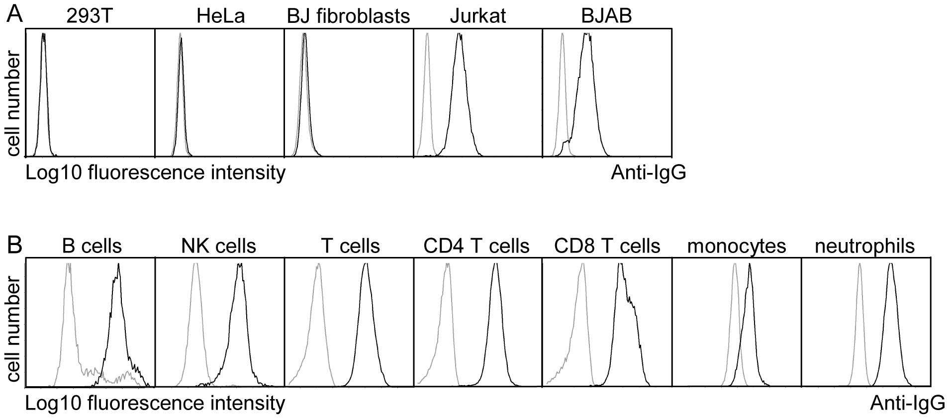 pUL11 interacts with leukocytes.