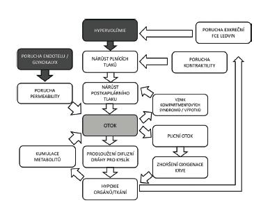 Vliv hypervolémie, poruchy endotelu na vznik otoků a poškození orgánů