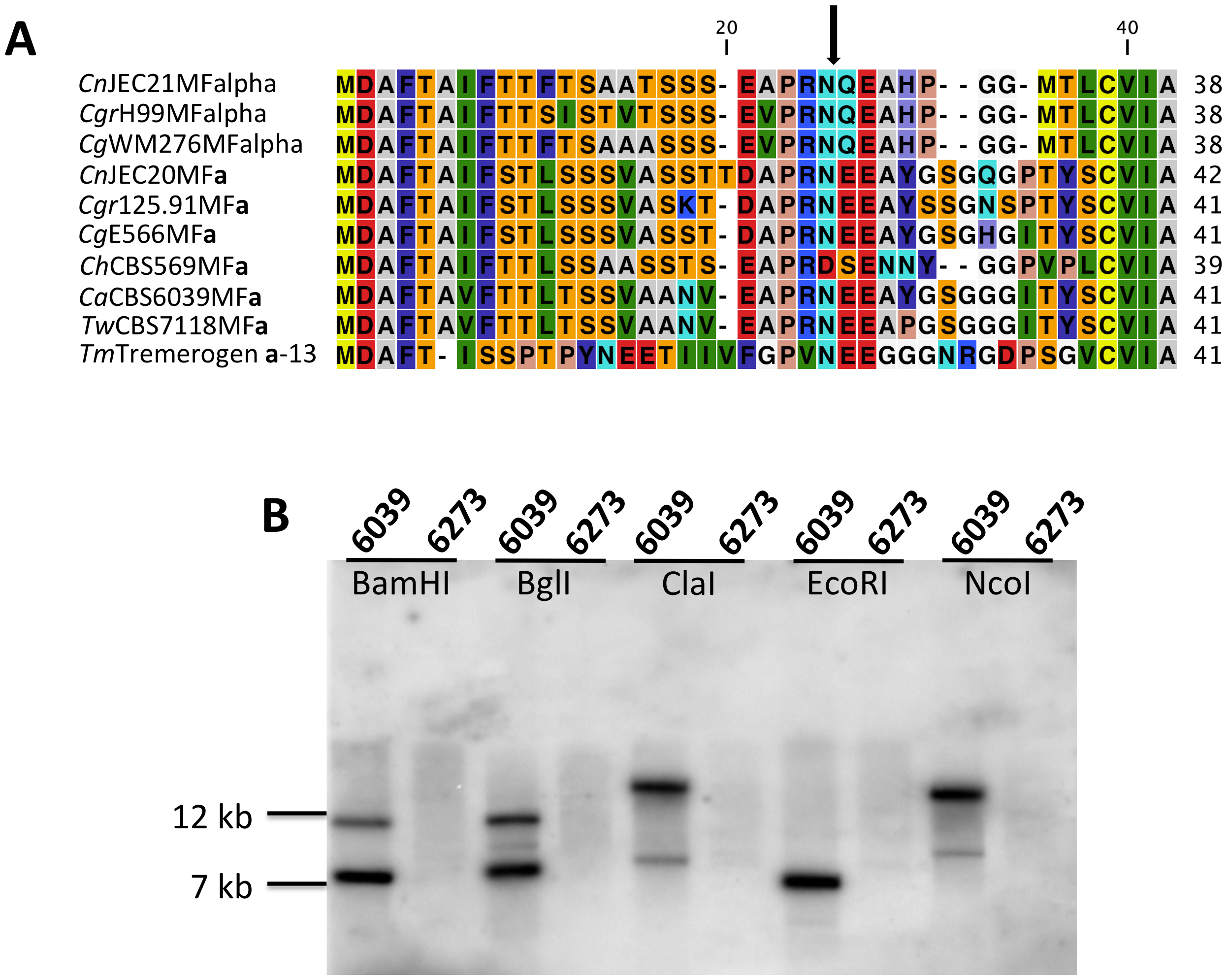 Analysis of the pheromone/receptor genes in <i>C. amylolentus</i>.