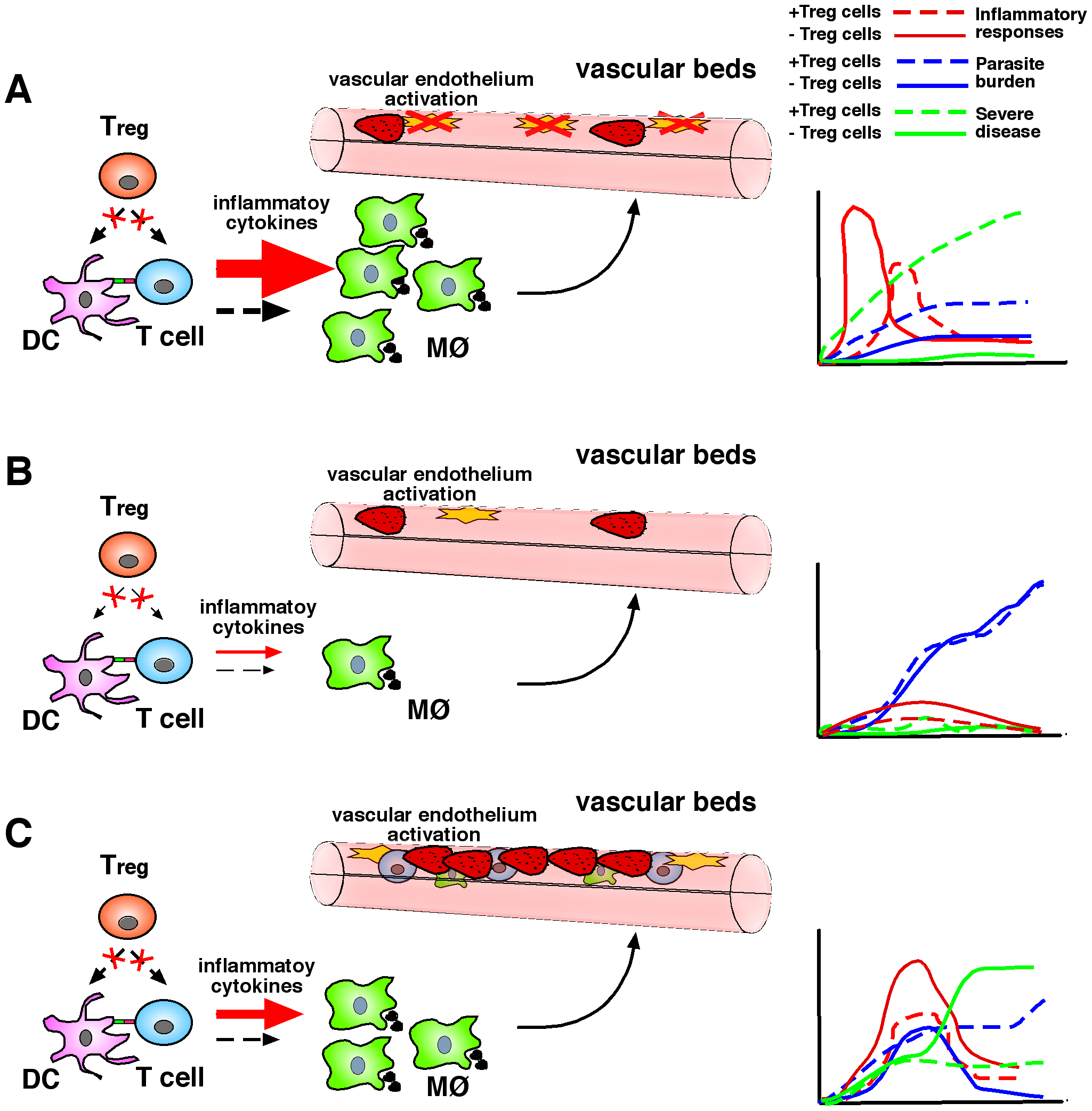 T<sub>reg</sub> cells in malaria: Lessons learnt from experimental rodent models.