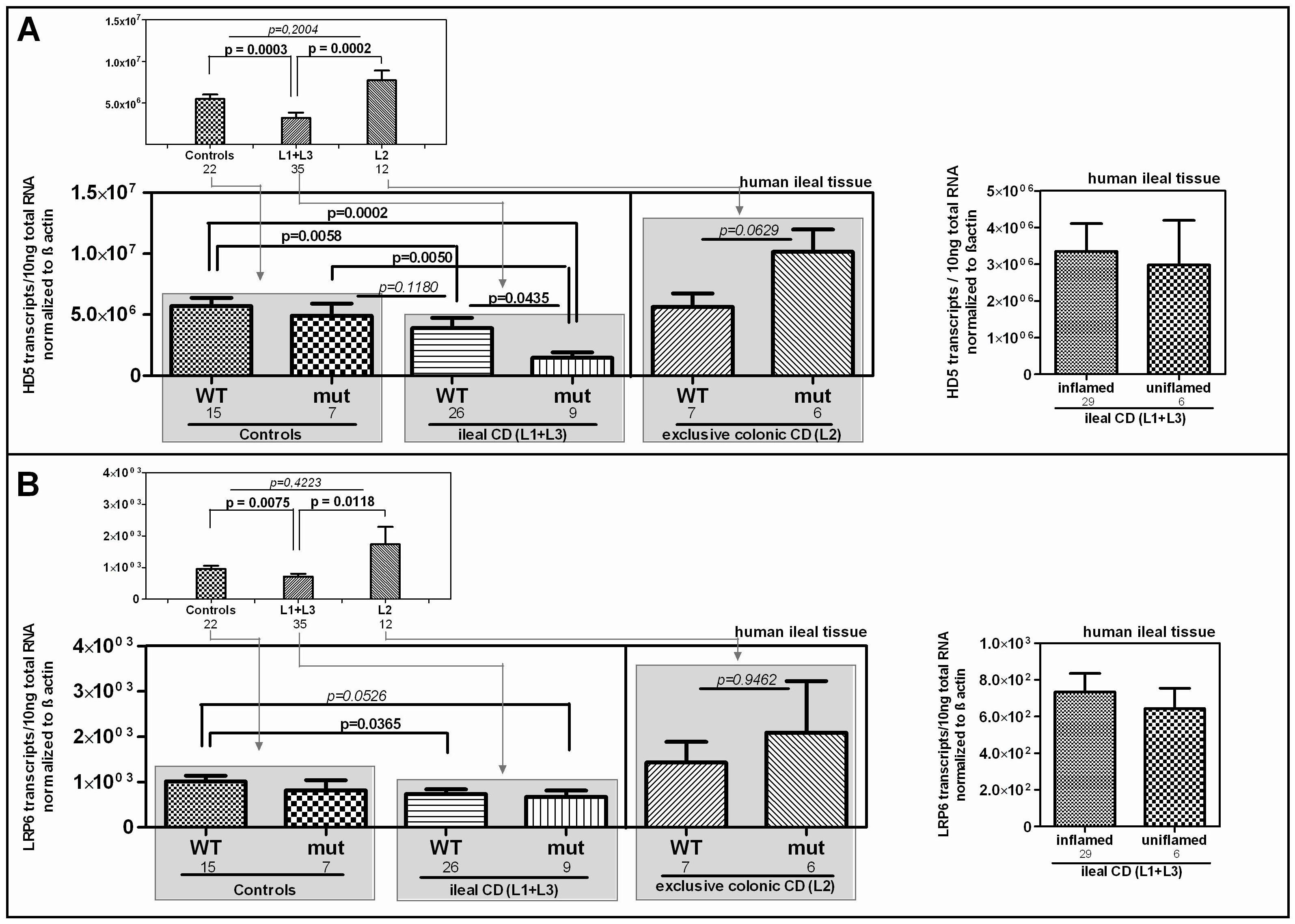 mRNA expression in ileal CD: Effect of the coding rare rs2302685 variant on the expression levels of HD-5 and LRP6.