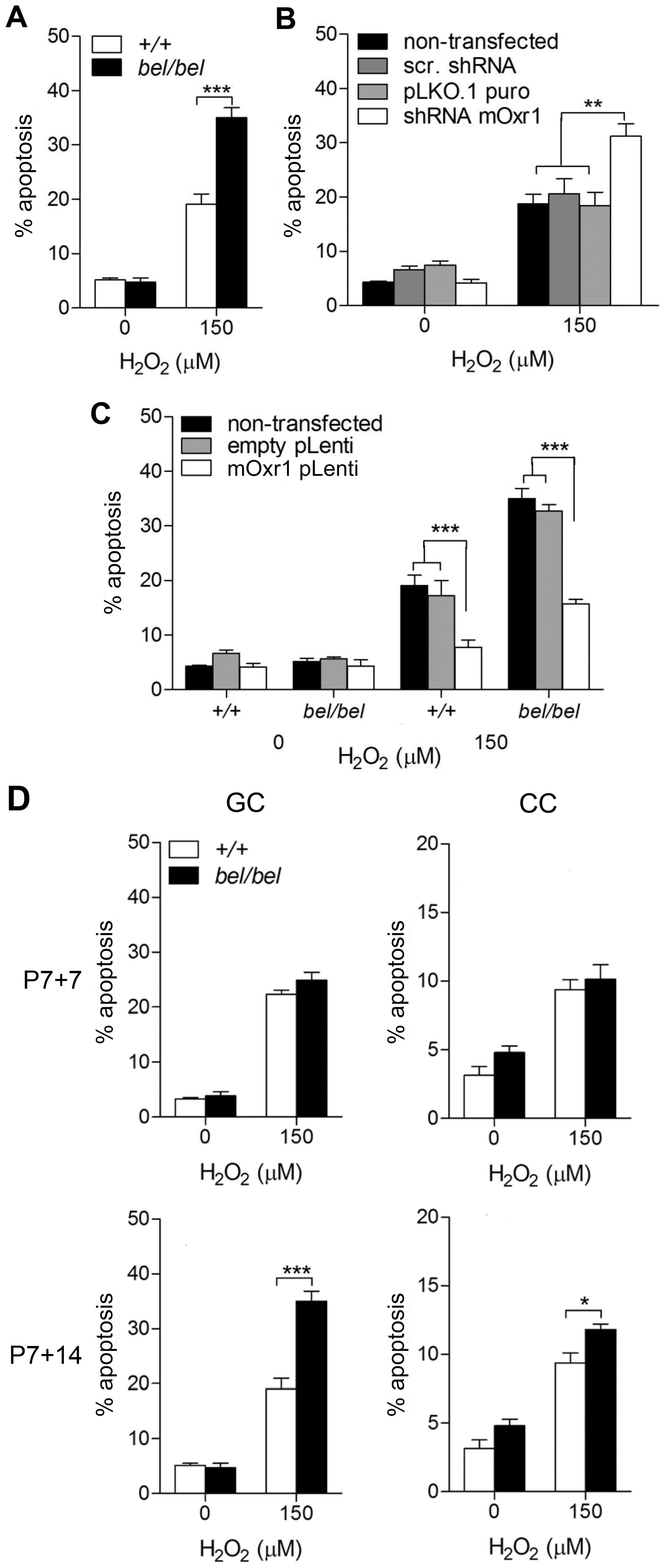 Oxr1 regulates sensitivity of GC neurons to oxidative stress.