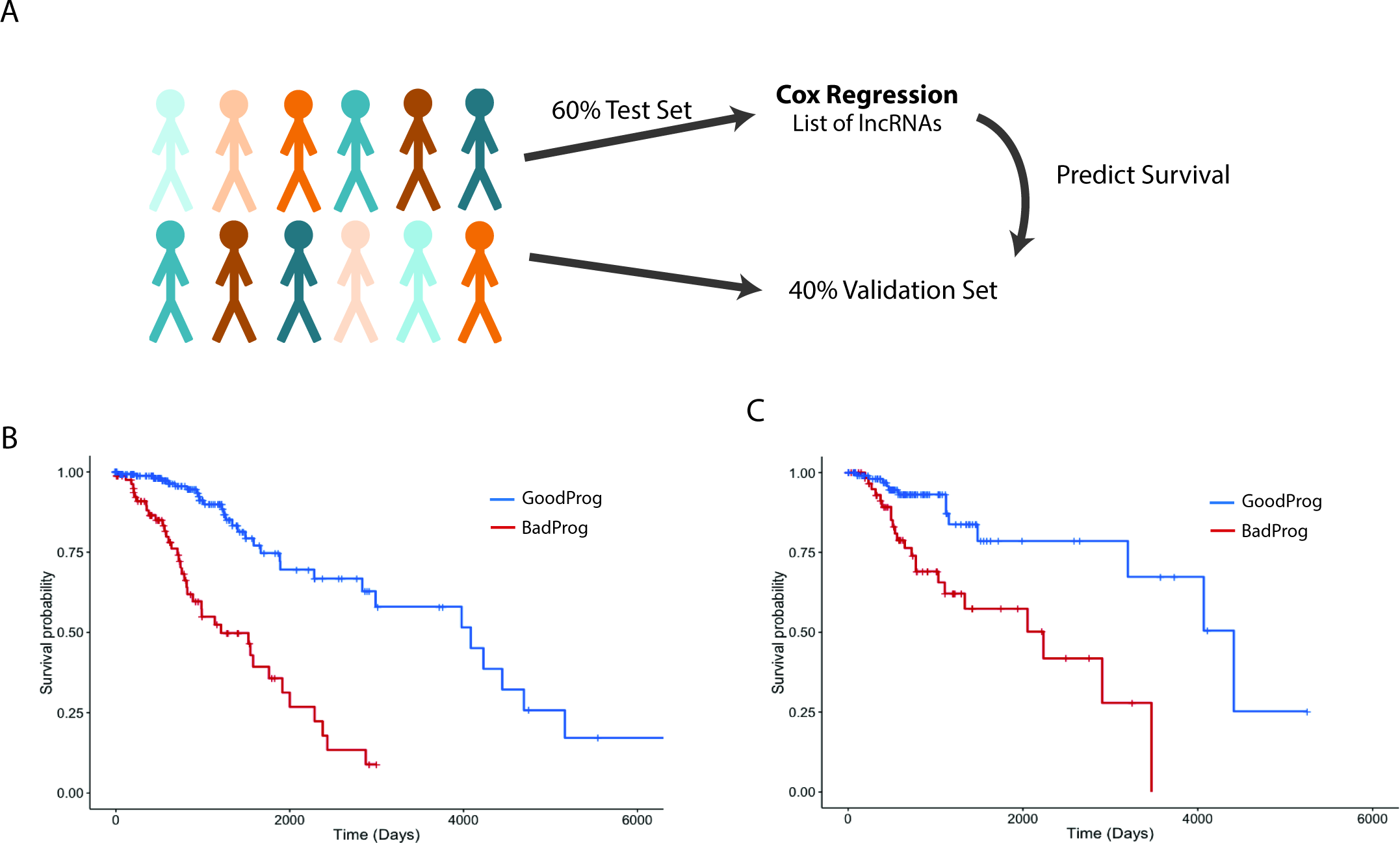 Expression of a subset of lncRNAs is associated with survival in LGG patients.