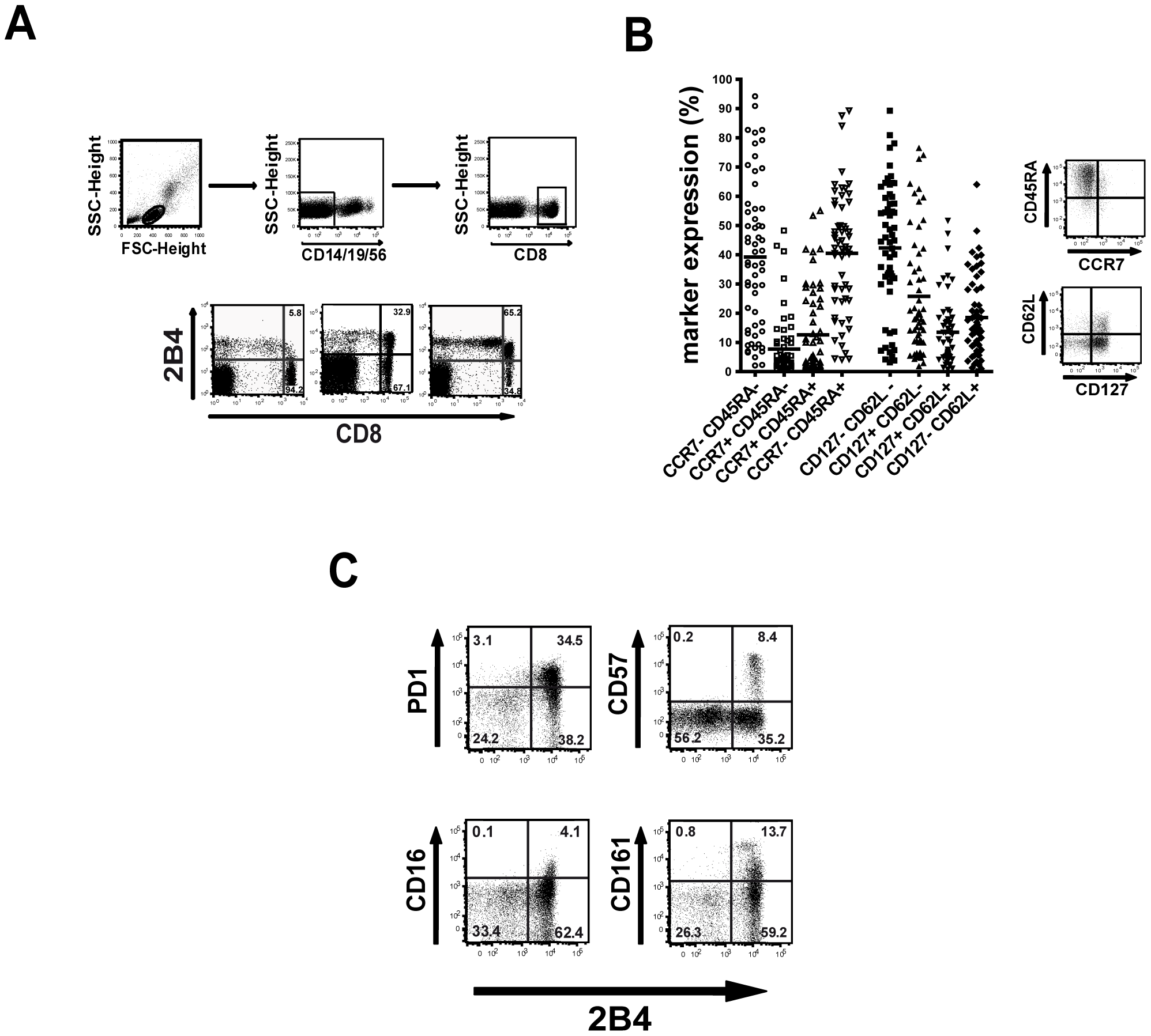 Characteristics of 2B4+ CD8+ T cells.