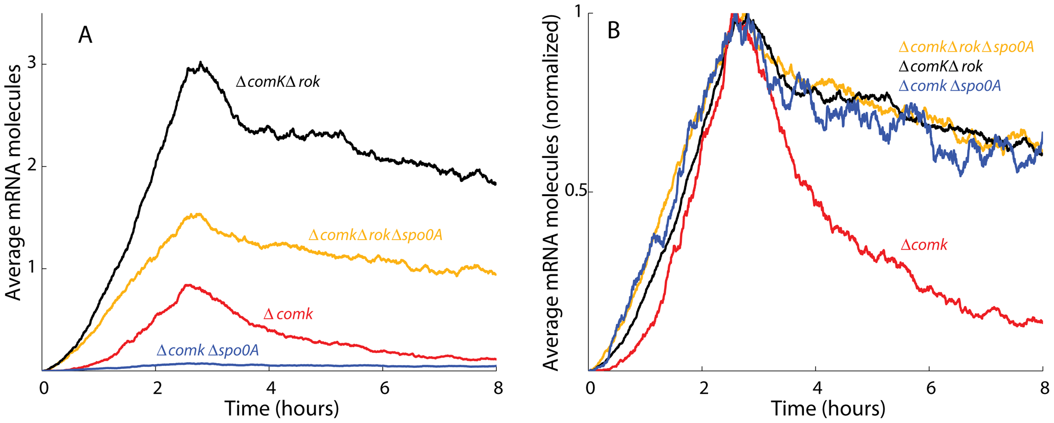 Stochastic simulation data match the experimentally observed <i>comK</i> expression.