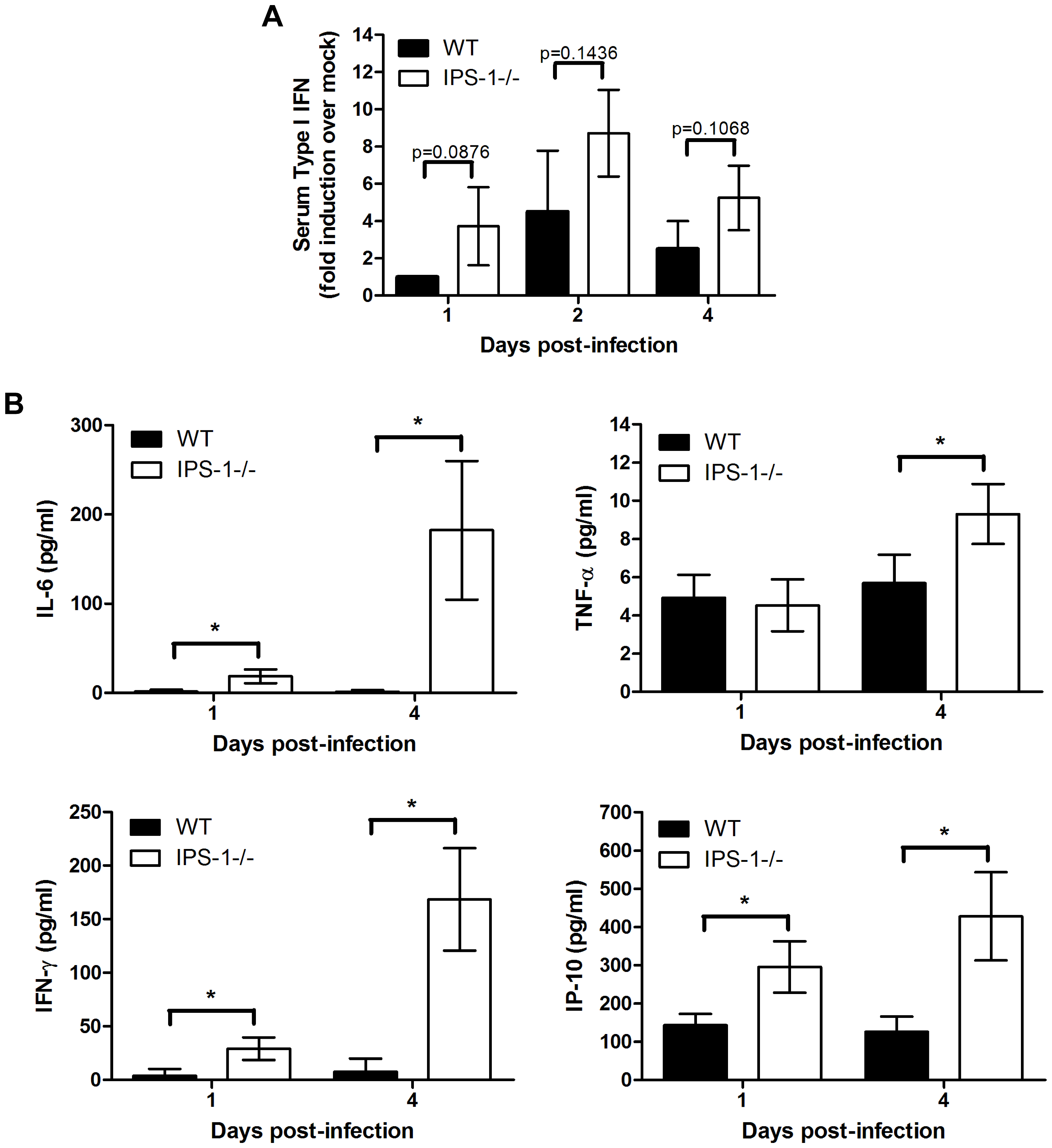 Enhanced levels of IFN, proinflammatory cytokines, and chemokines in serum from WNV-infected IPS-1<sup>−/−</sup> mice.