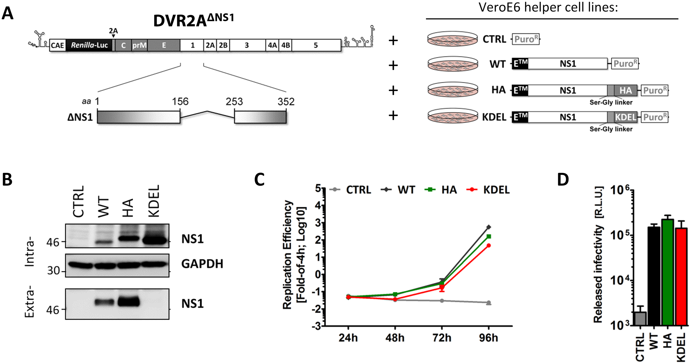 NS1 secretion is dispensable for the production of infectious DENV particles.