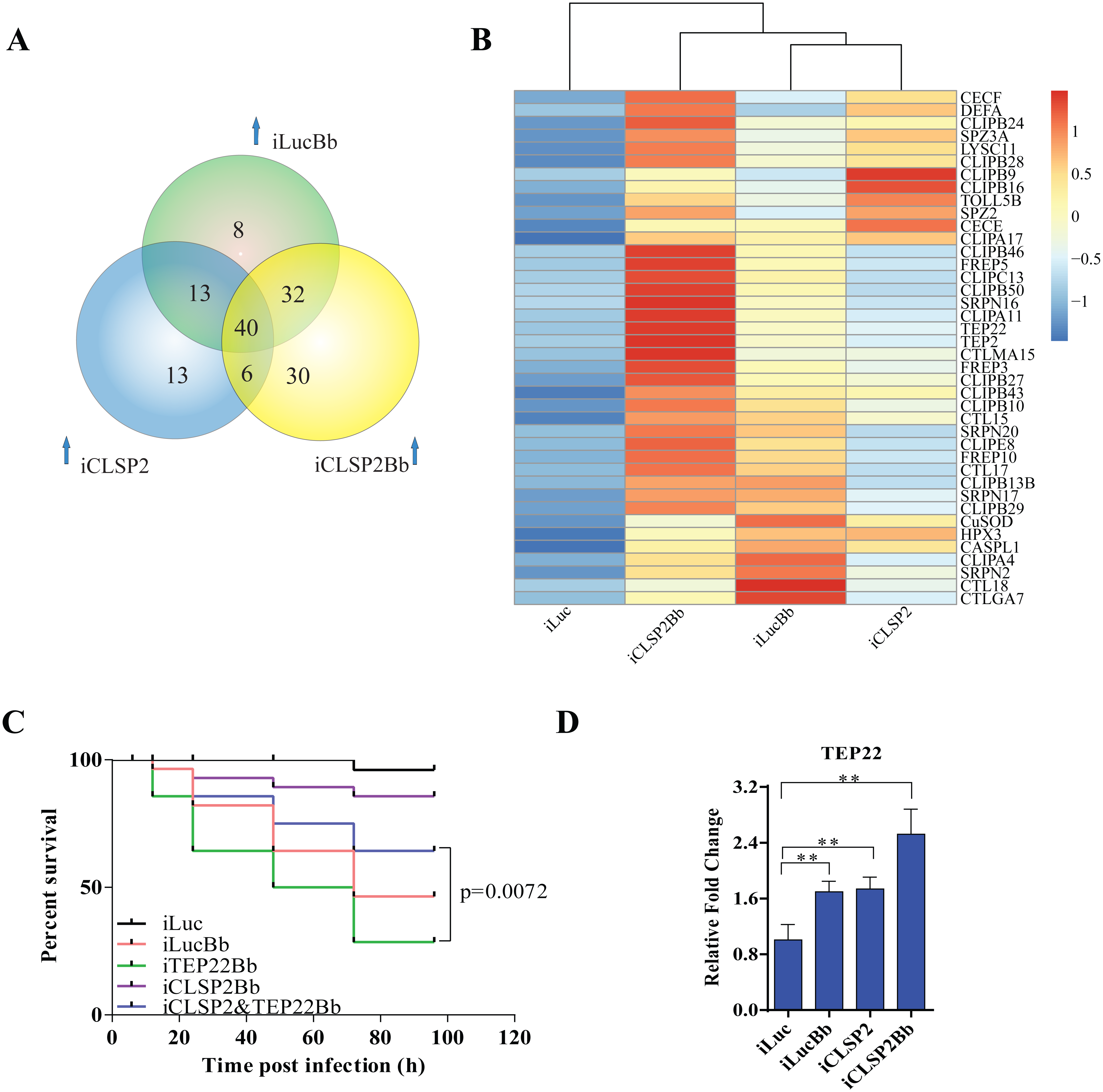 Comparative transcriptome analysis of CLSP2 modulation of immune genes and the role of TEP22 in anti-fungal defense.