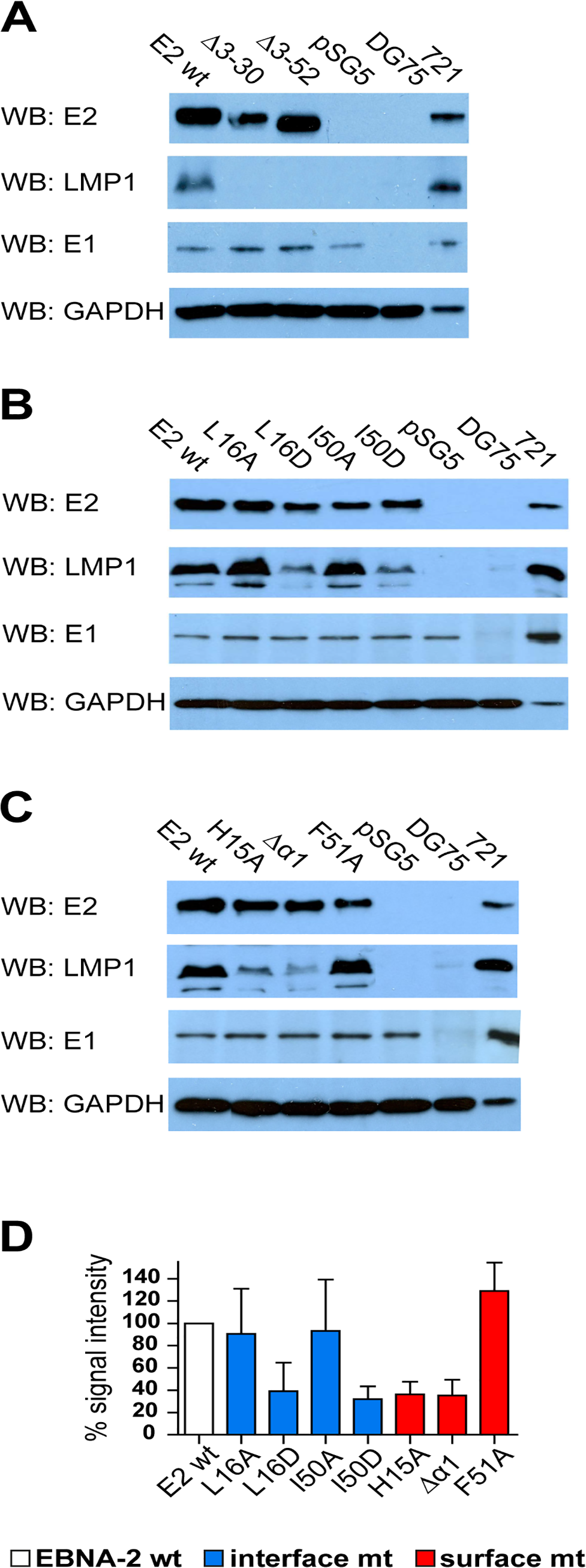 LMP1 activation by EBNA-2 requires dimerization, the surface residue His15, and the protruding α1-helix.