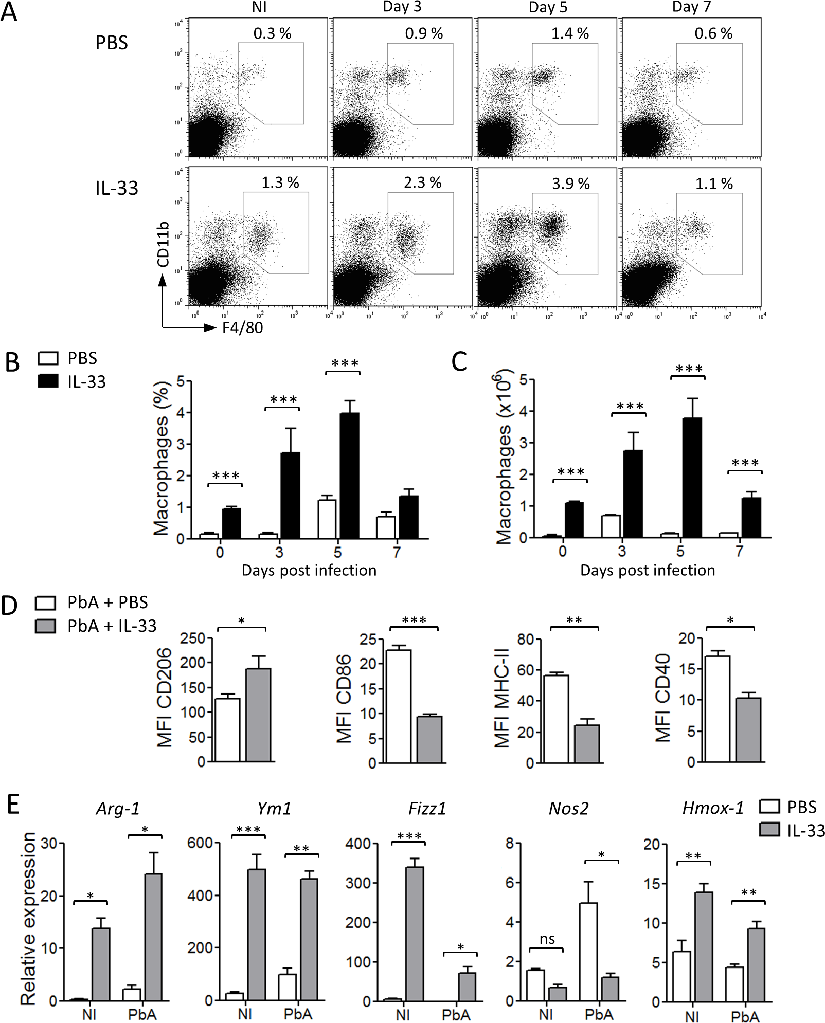IL-33 polarizes M2 macrophages in PbA-infected mice.