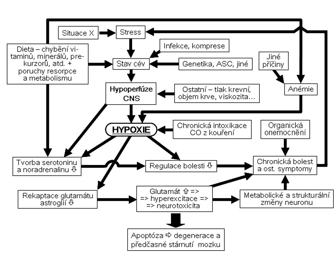 Schéma 2. Celkové schéma rozvoje a udržování bolesti u FMS.