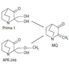 Chemická struktura Prima-1 a APR- -246 a jejich spontánní konverze na methylen quinuclidinon (MQ).