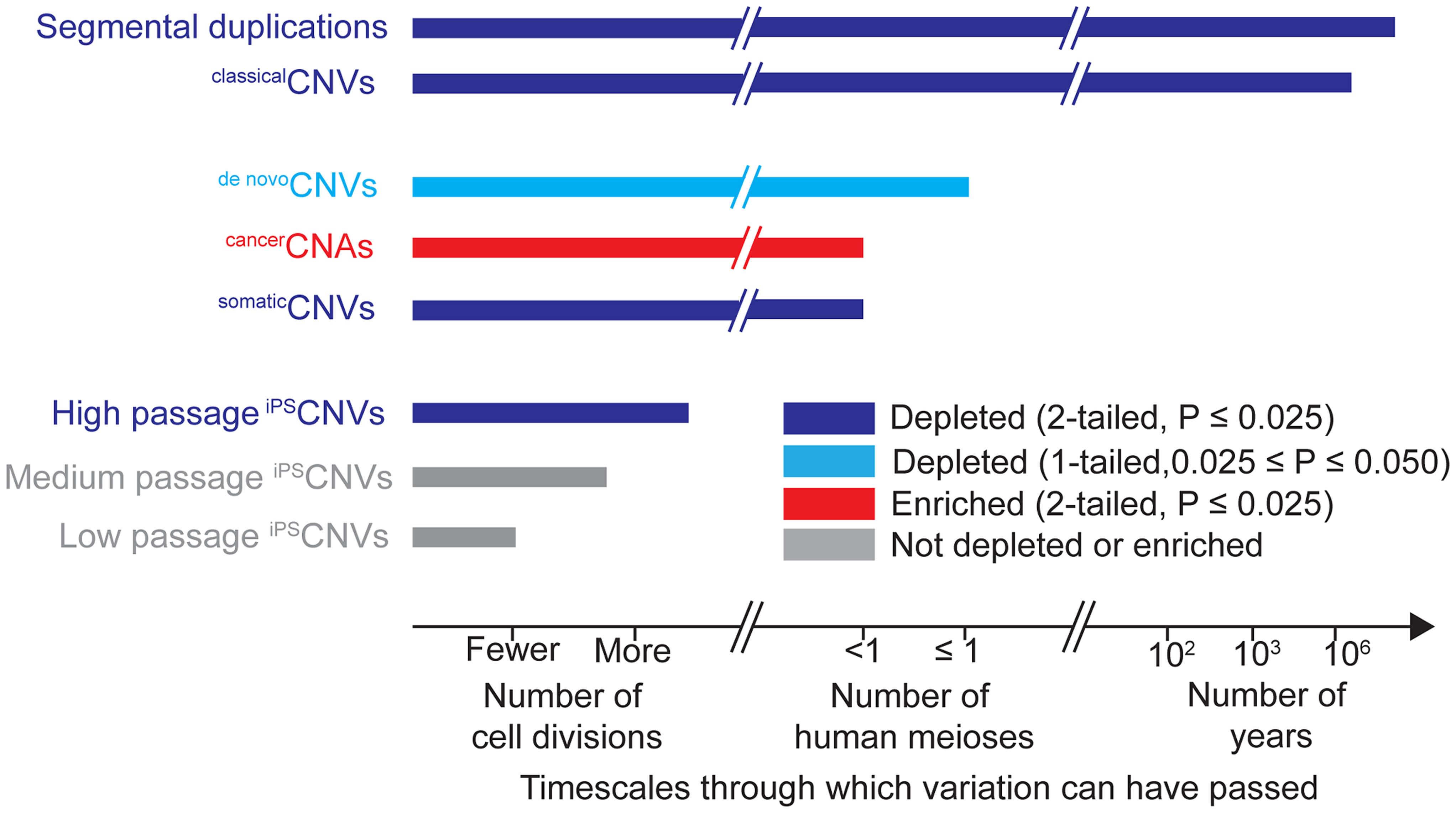 Timescales through which different types of genomic variation have been present and their relationships to UCEs.