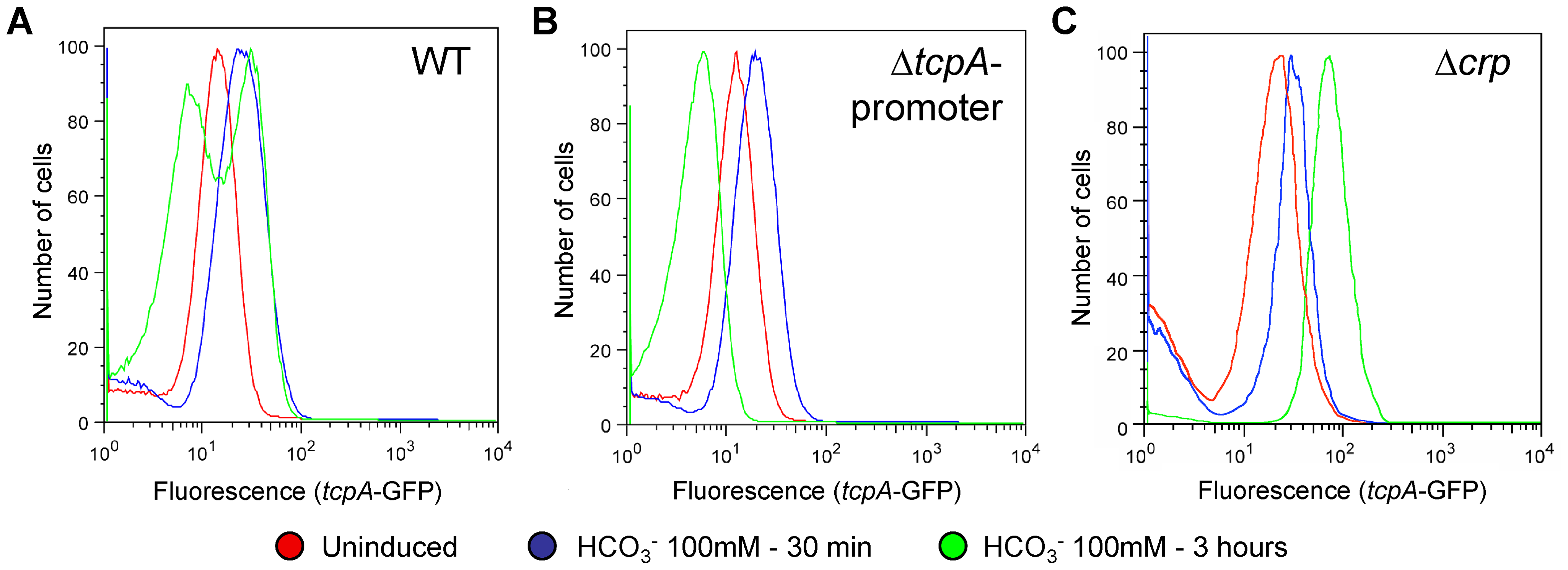 The <i>tcpA</i> promoter and CRP are required for the <i>tcpA</i> bistable phenotype.