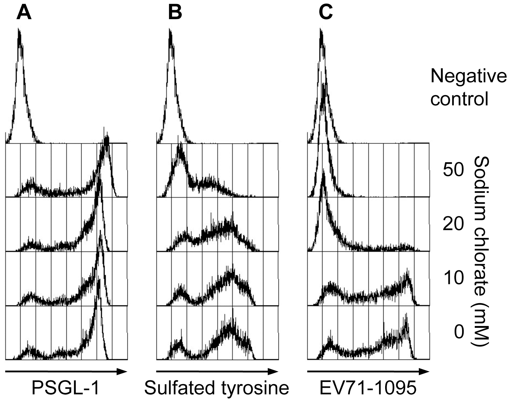 Effect of sodium chlorate on PSGL-1 binding to EV71-1095.