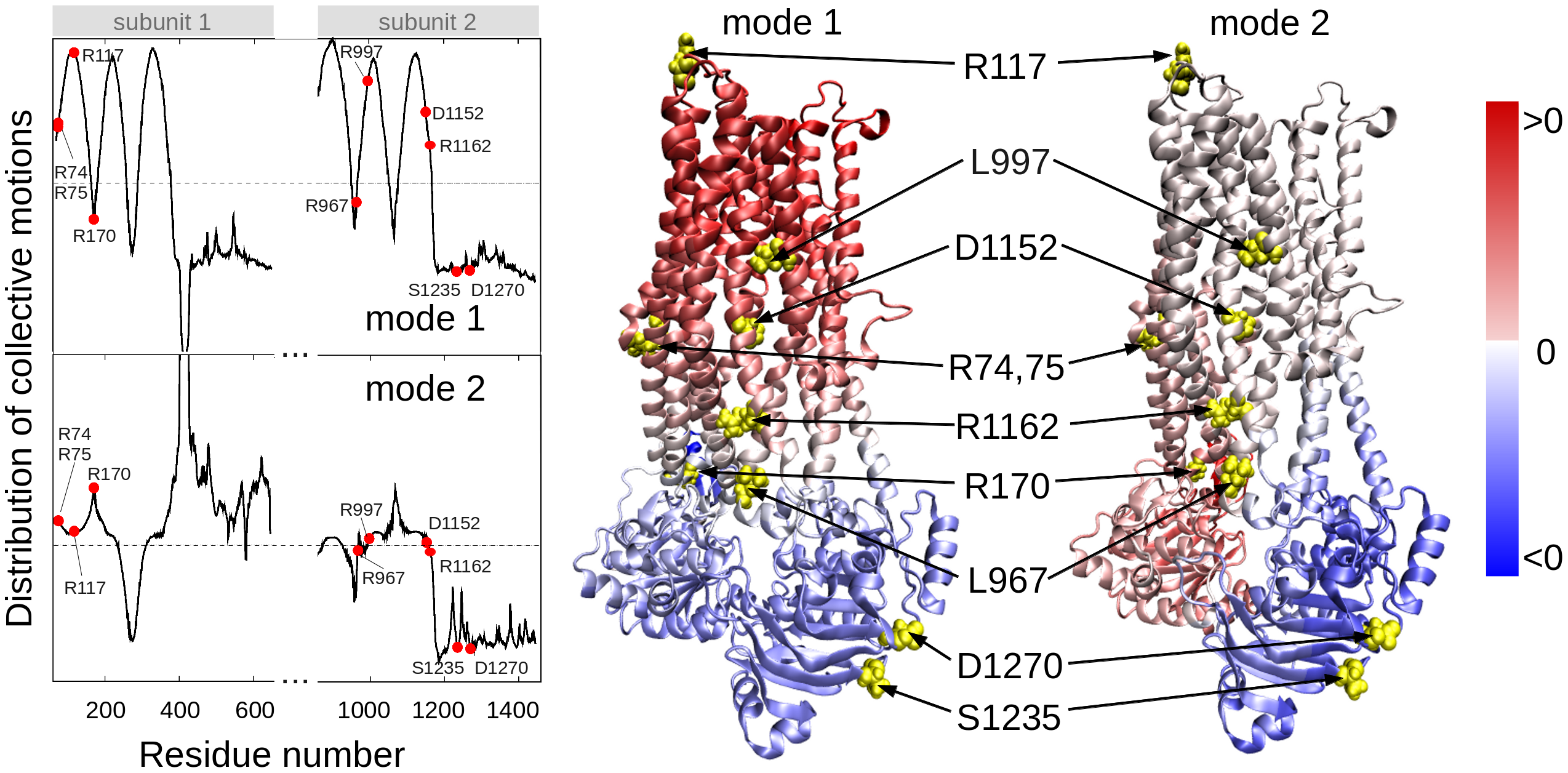 Location of selected variant sites with respect to the collective modes of the CFTR.