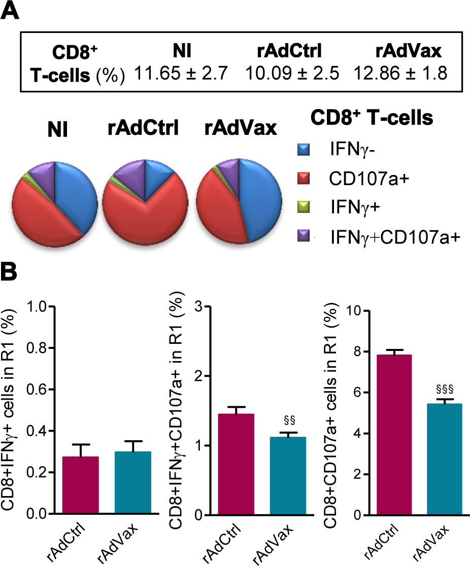 Reduced frequency of CD107a<sup>+</sup>CD8<sup>+</sup> T-cells in chronically <i>T. cruzi</i>-infected mice subjected to rAdVax immunotherapy.