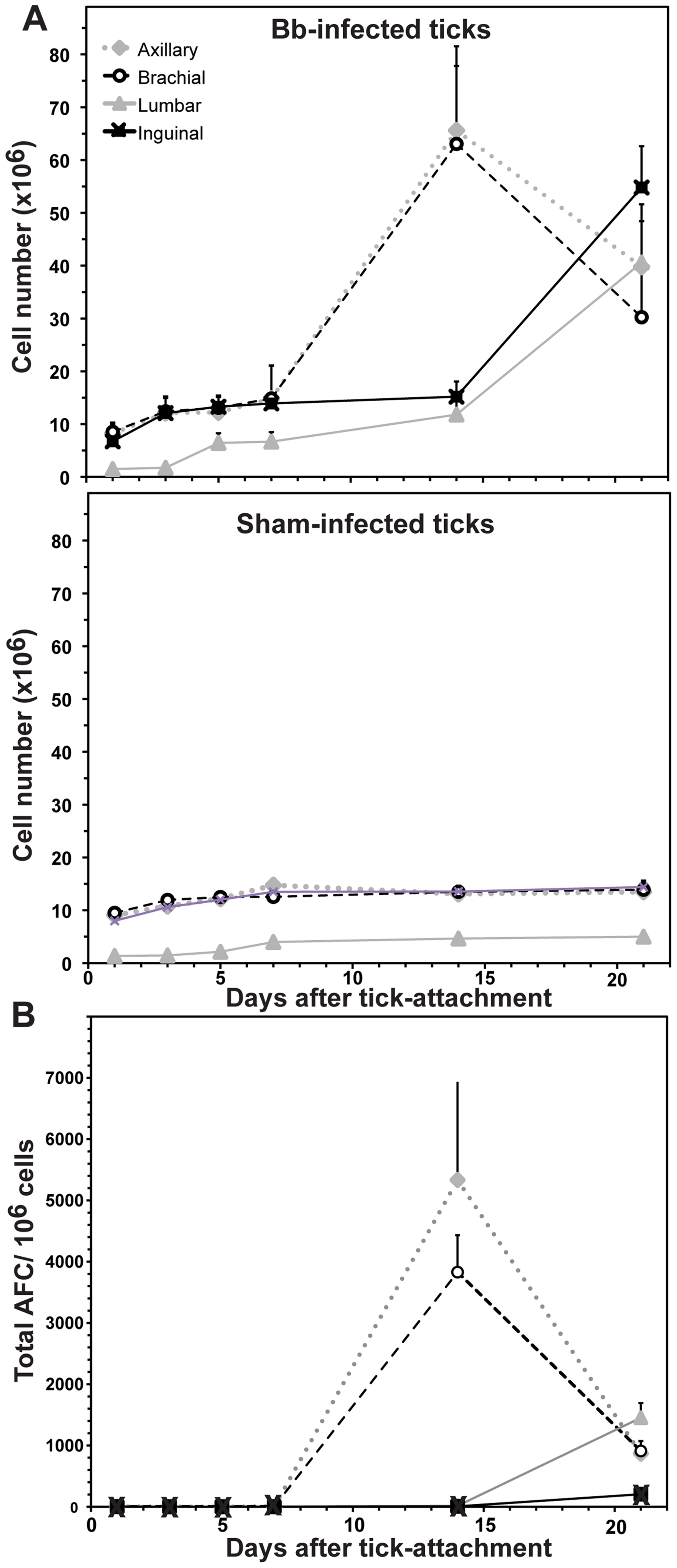 Tick-borne infection with <i>B. burgdorferi</i> causes systemic lymphadenopathy in mice.