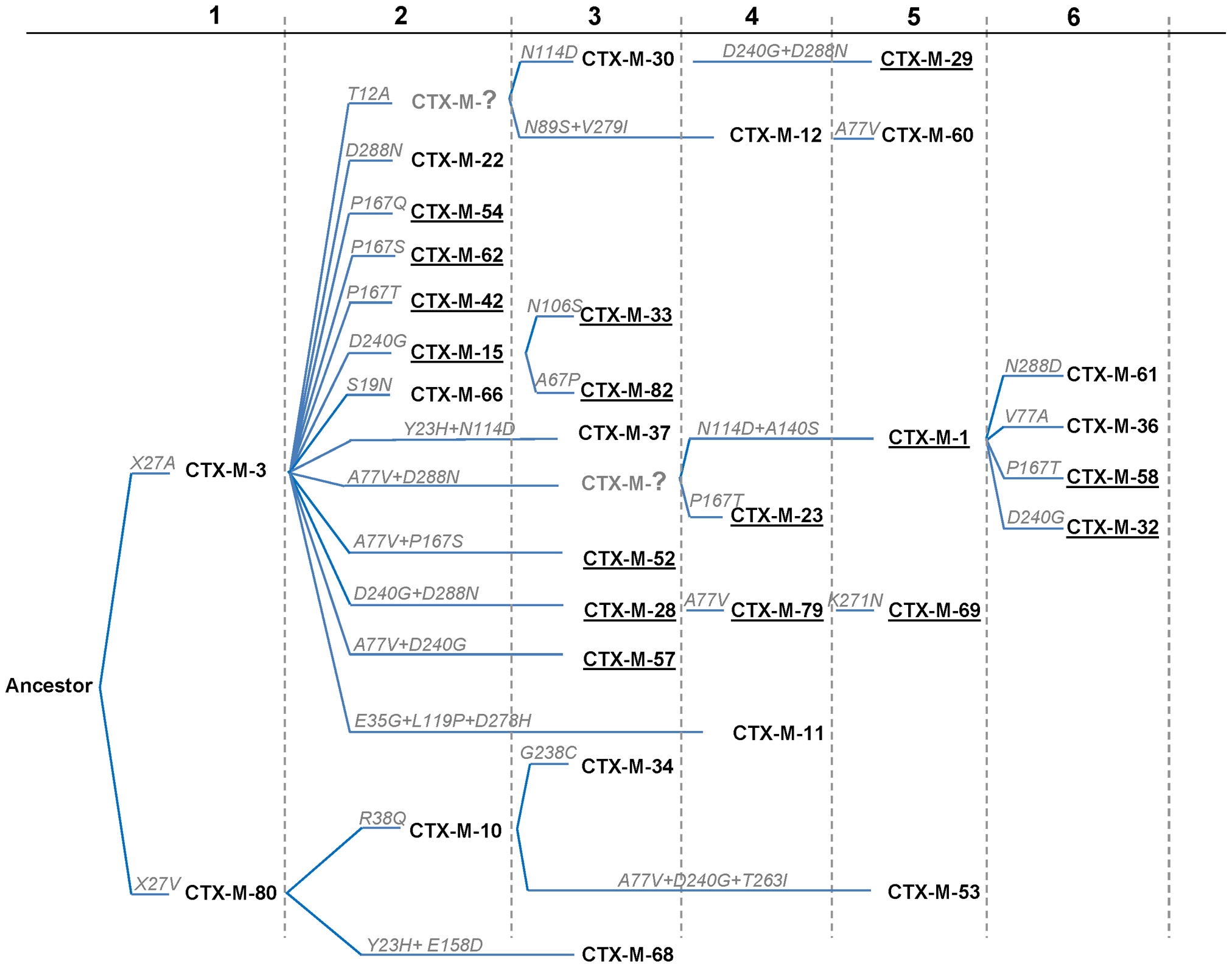 Phylogenetic reconstruction of CTX-M-1 cluster enzymes.