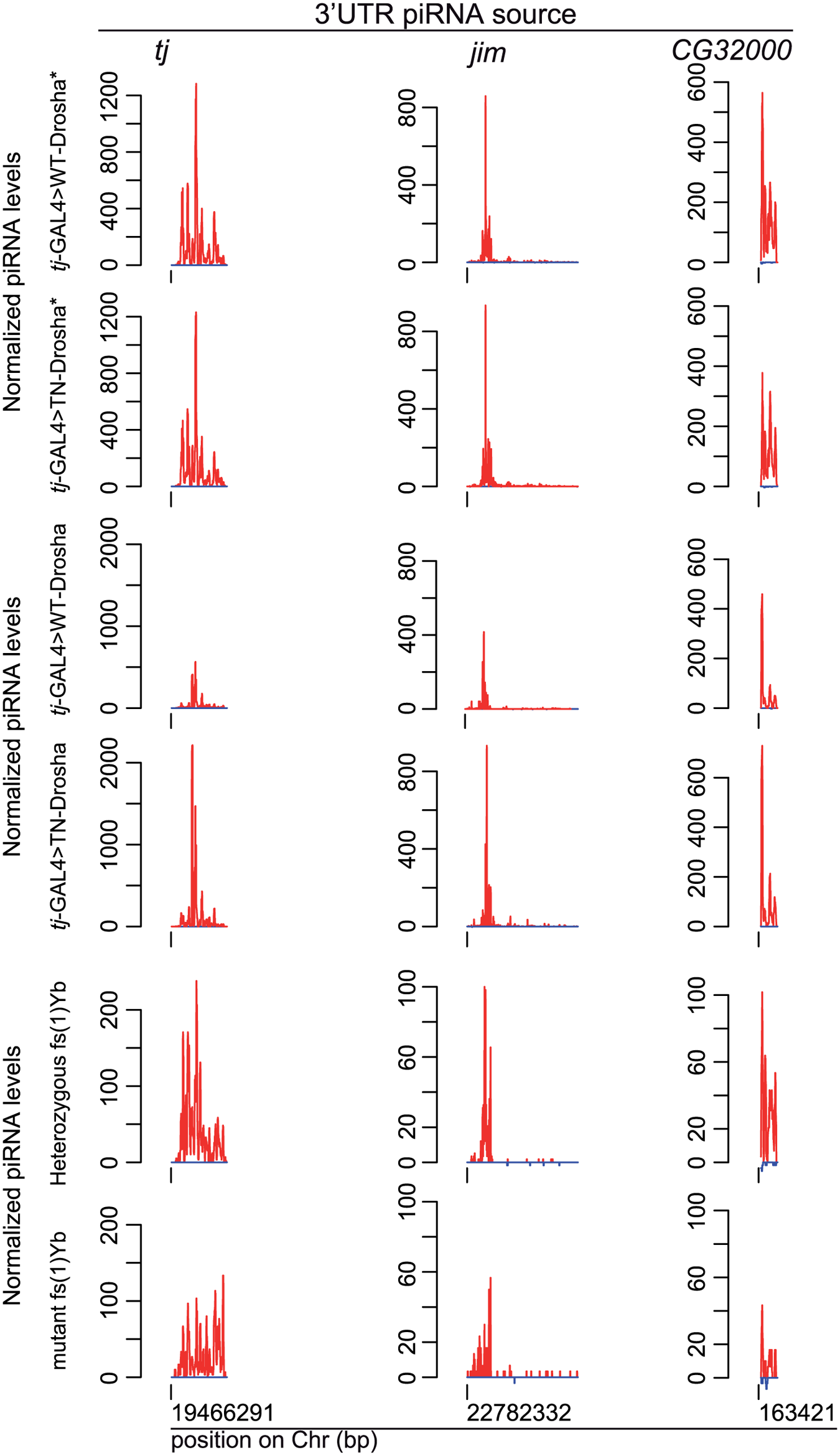 The amount of 3'UTR-derived piRNAs does not decrease in follicle cells lacking Drosha activity.