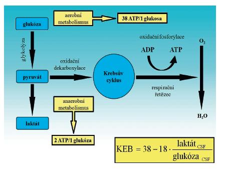 Zjednodušené schéma metabolické přeměny glukózy