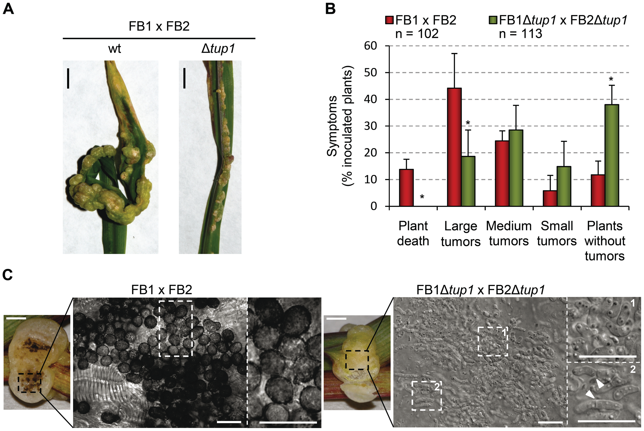 <i>tup1</i> is required for full pathogenic development.
