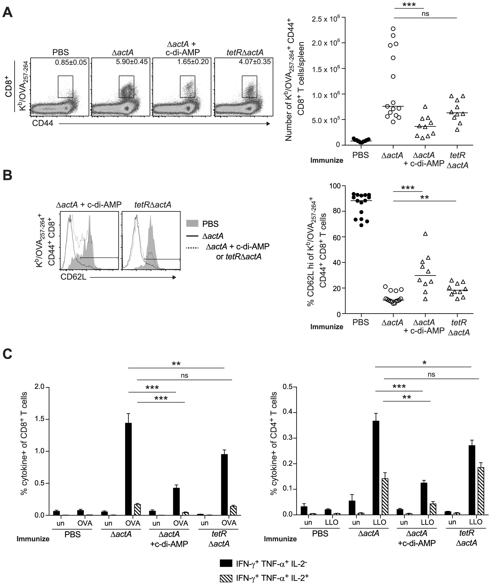 T cell priming is inhibited in the presence of enhanced STING activation.