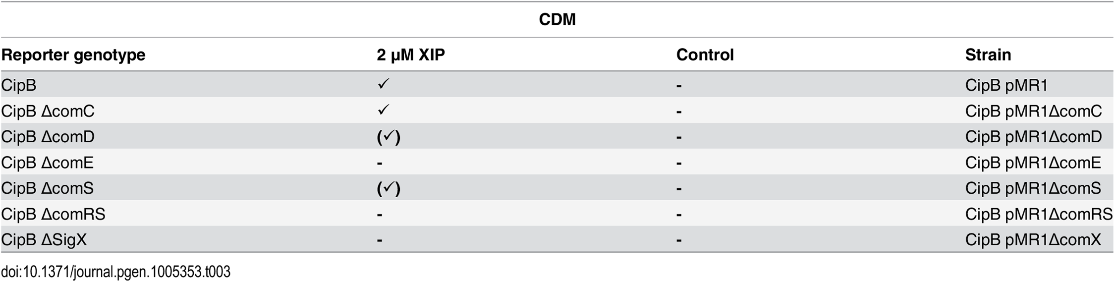 Expression of <i>cipB</i> in different gene deletion background in CDM under XIP induced conditions.