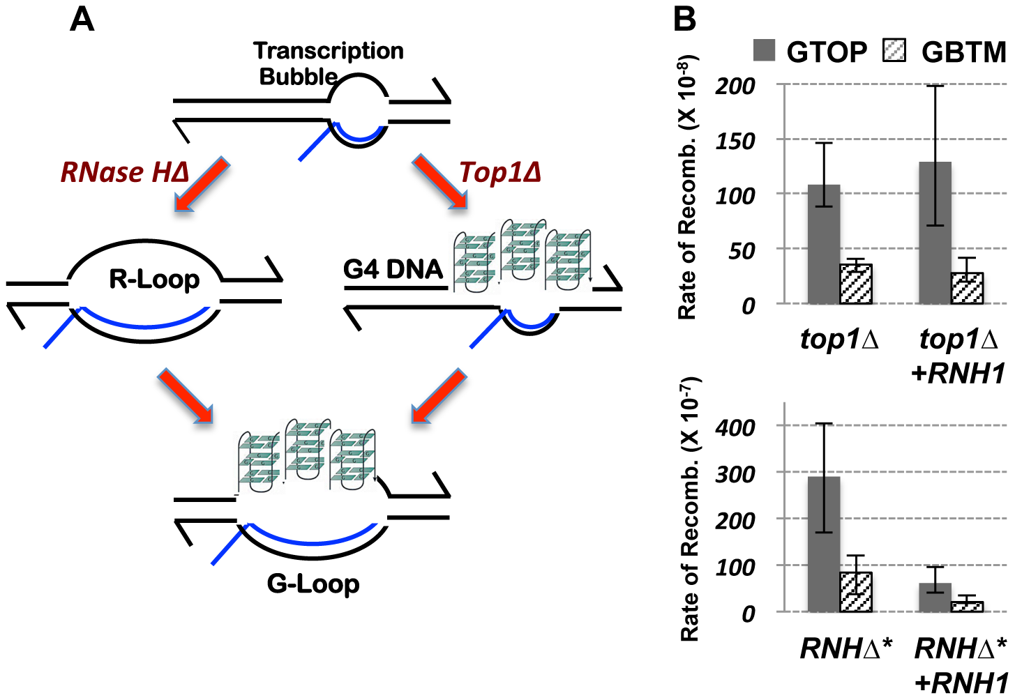 The RNA∶DNA hybrid and gene conversion at the highly transcribed Sμ.