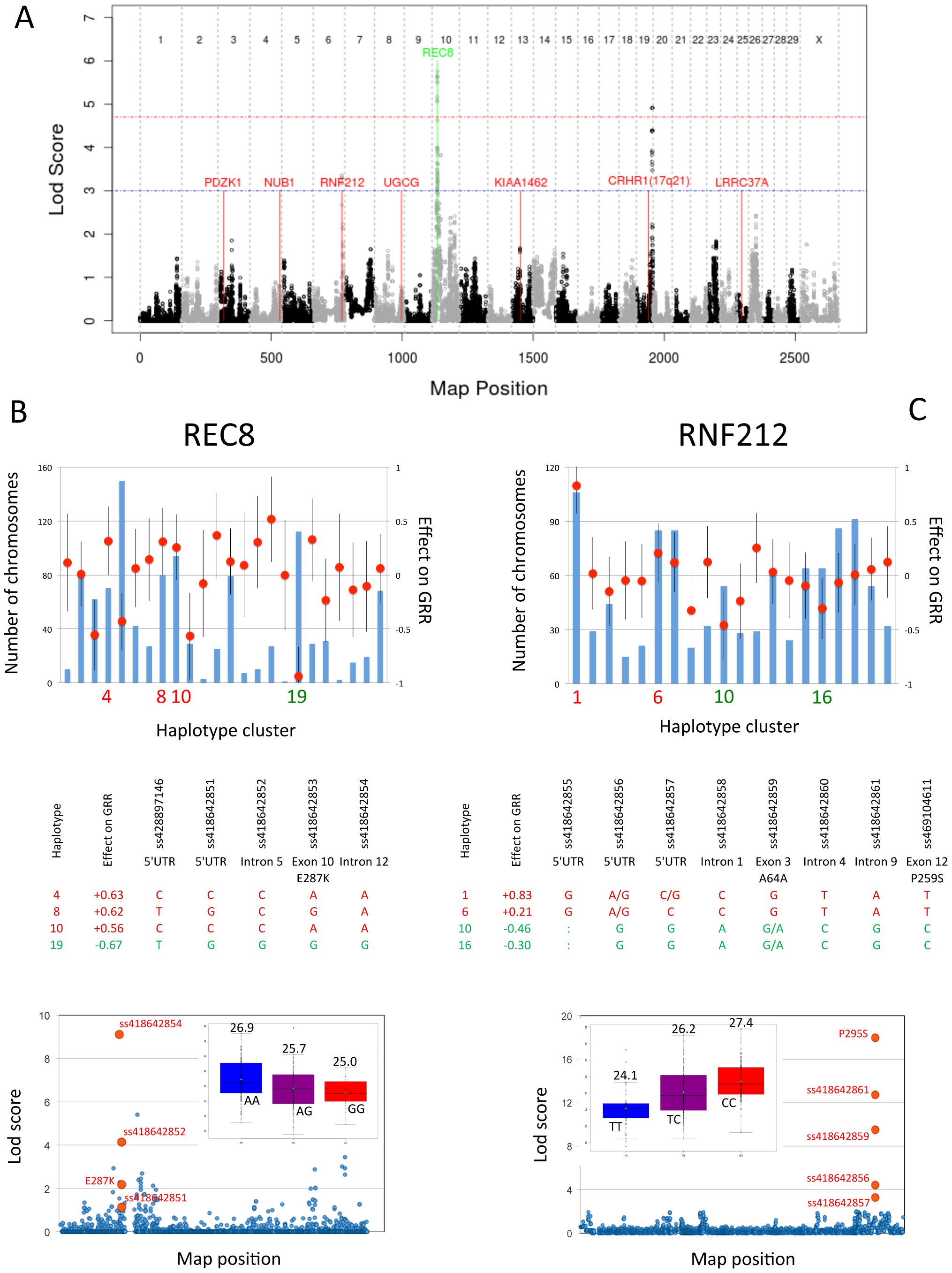 Genome-wide lod score profiles, observed counts and effects on global recombination rate.