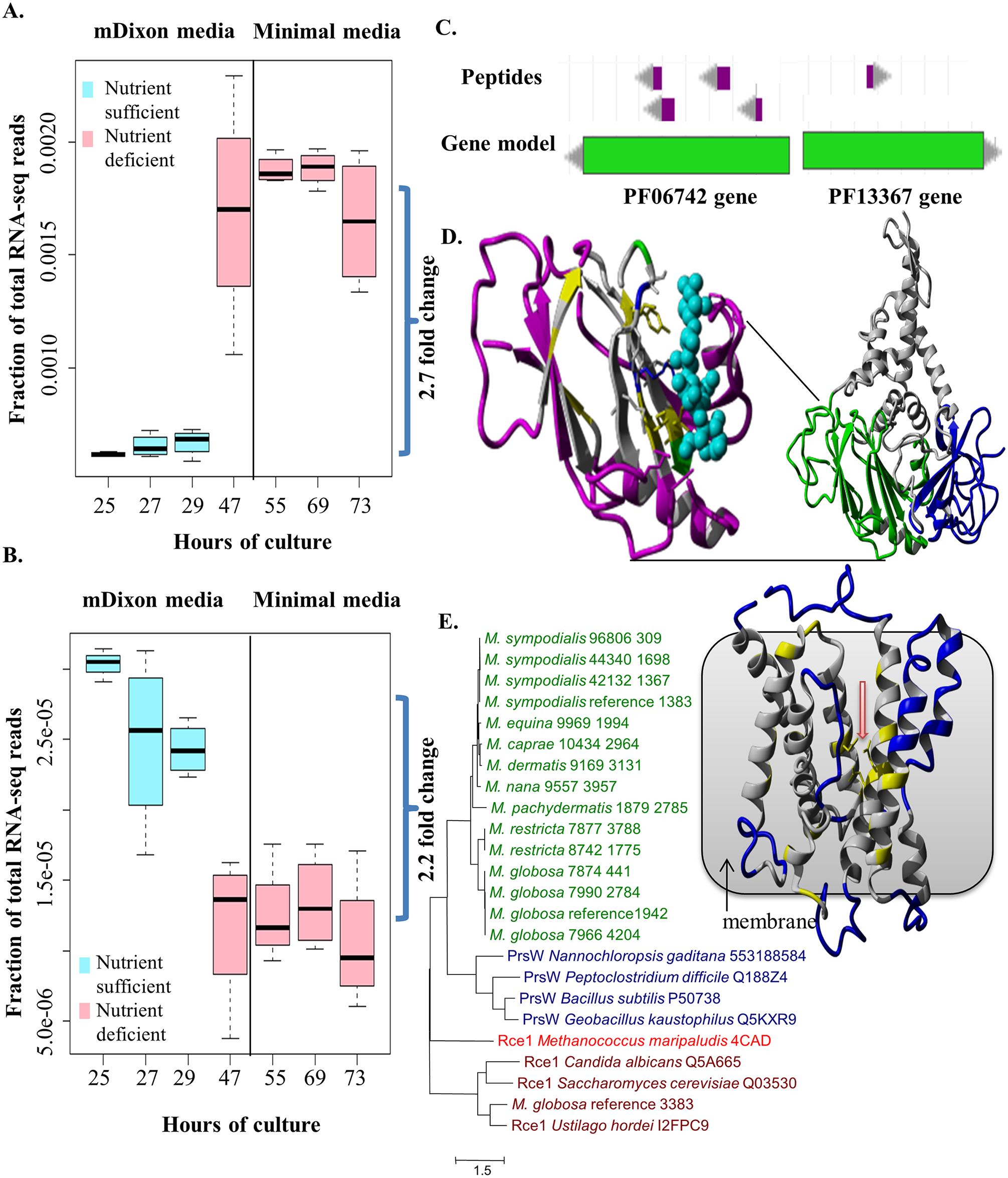 Functional characterization of novel, putative horizontally transferred genes in <i>Malassezia</i>.