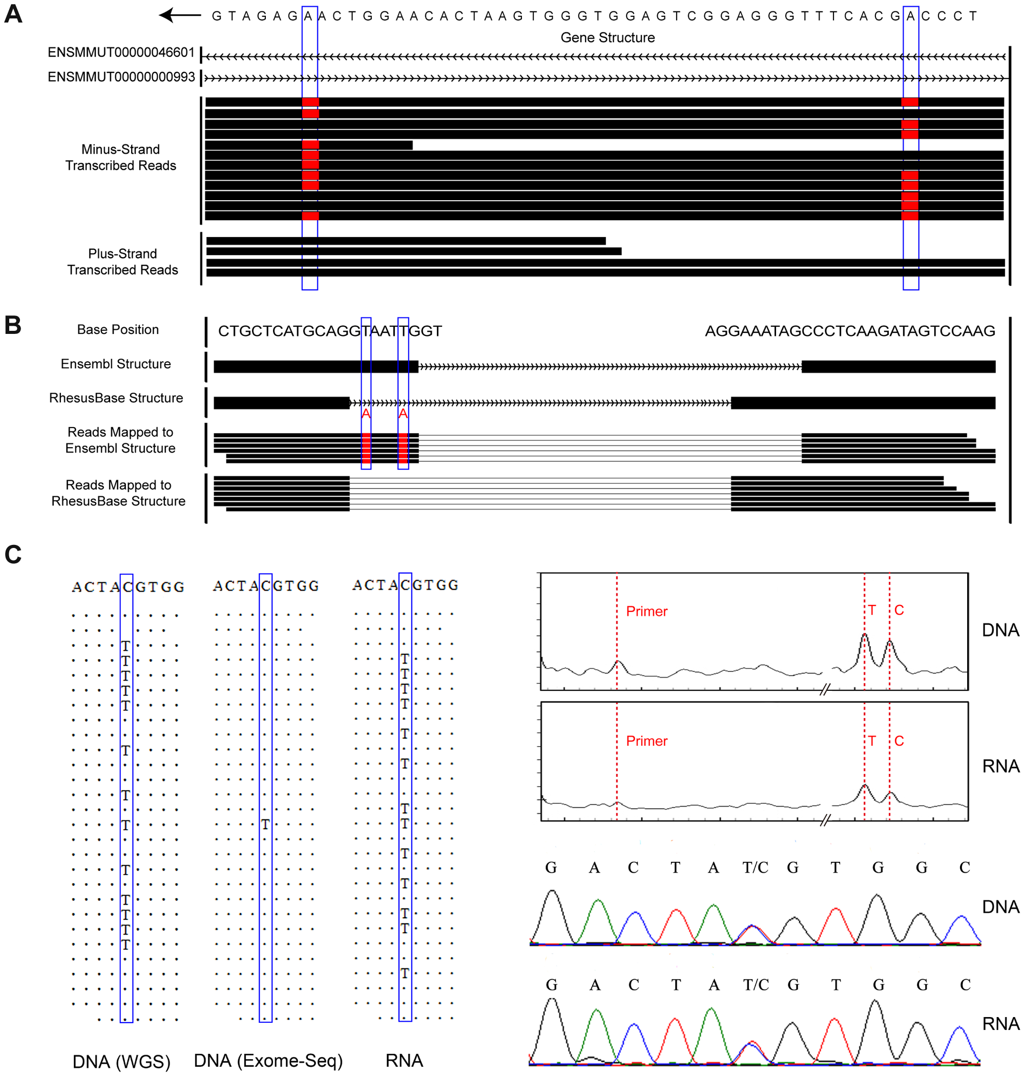 Experimental and computational strategies for accurate editome identification in rhesus macaque.