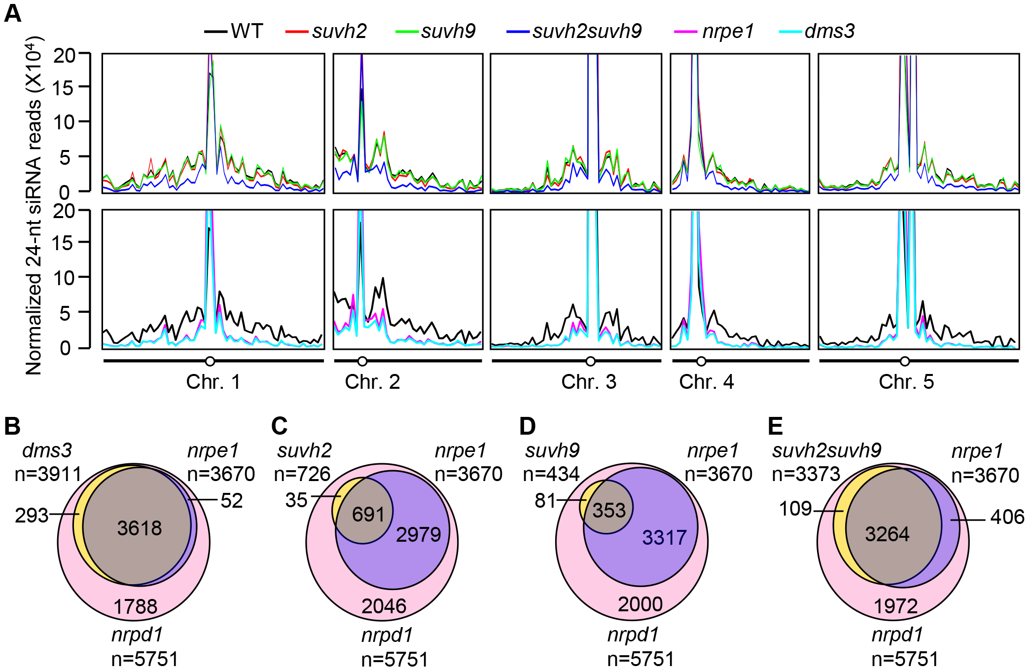 Small RNA analyses by small RNA Northern blotting and small RNA deep sequencing.