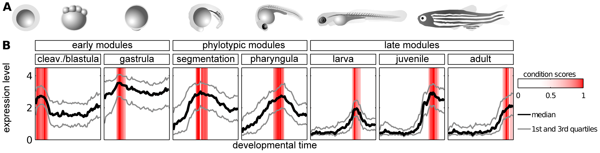 Modules of genes with time-specific expression during zebrafish development.
