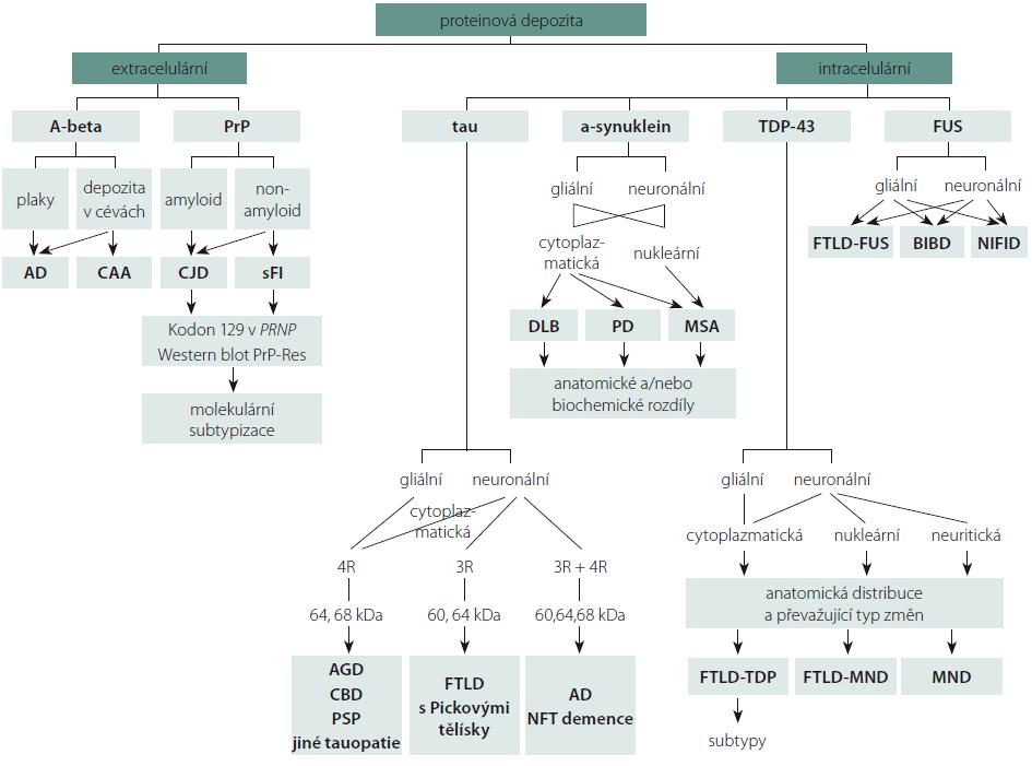 Schéma 1. Algoritmus pro klasifikaci neurodegenerativních onemocnění (převzato z [67]).