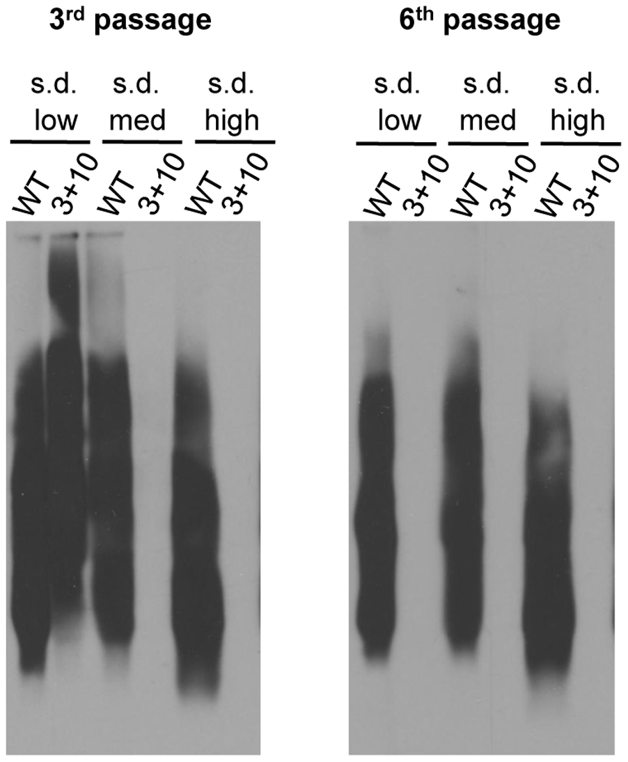 [<i>RNQ</i>+] variants rely on putative Sis1 binding sites to different extents.