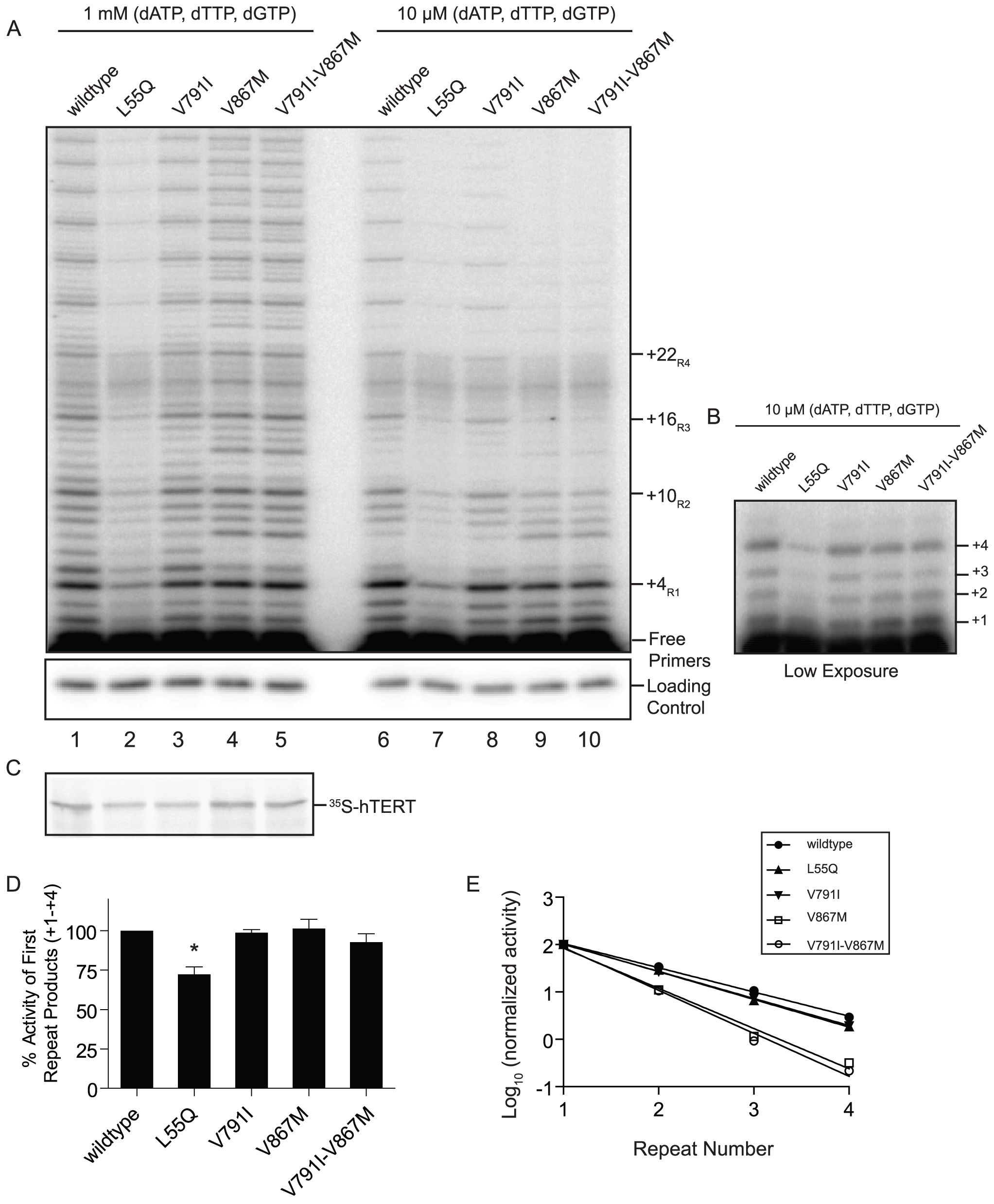 The ancestral mutant telomerase affects repeat addition processivity <i>in vitro</i>.