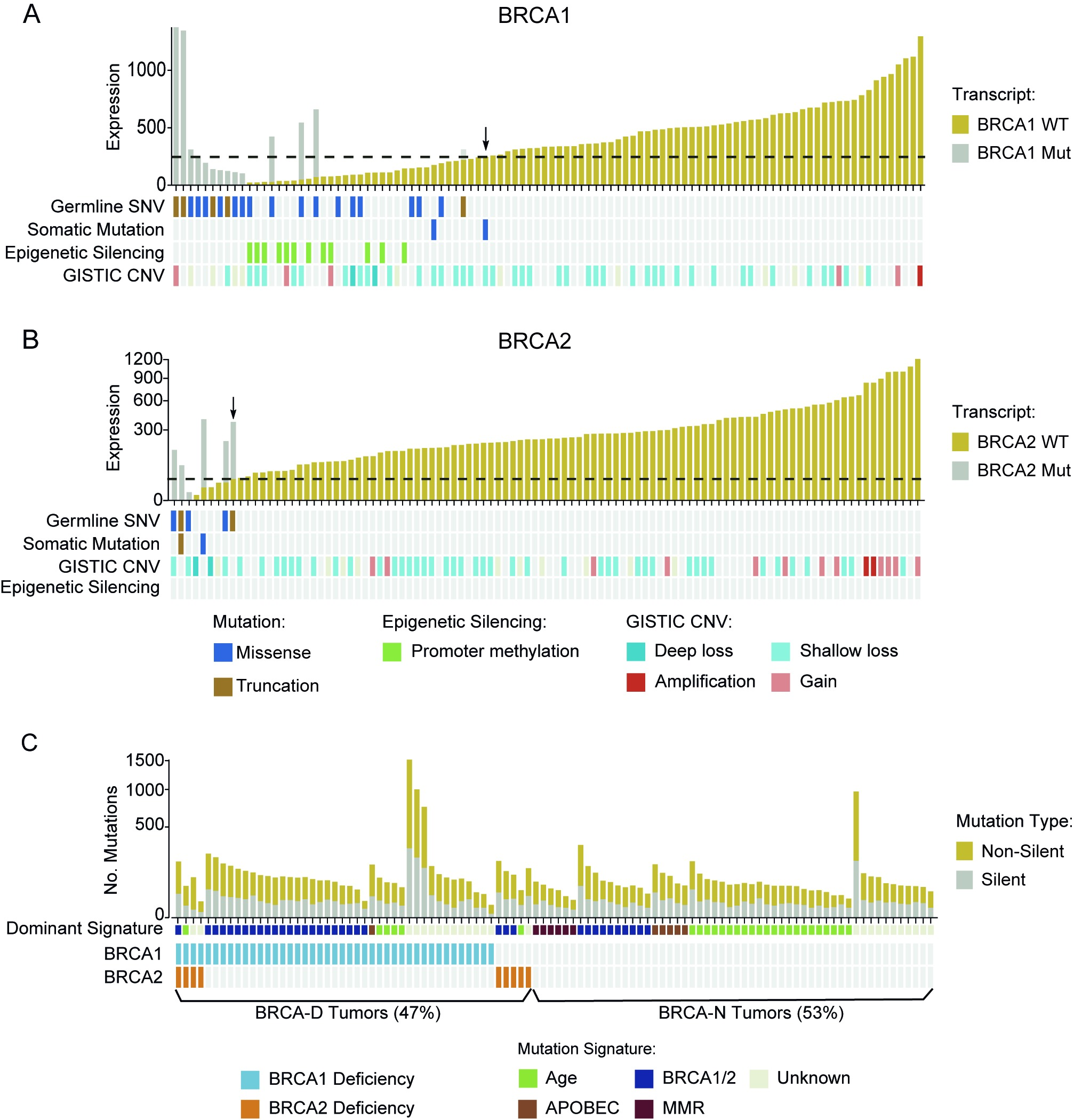BRCA deficiency characterized by low wild-type transcript abundance defines a unique subtype of triple negative breast cancer.