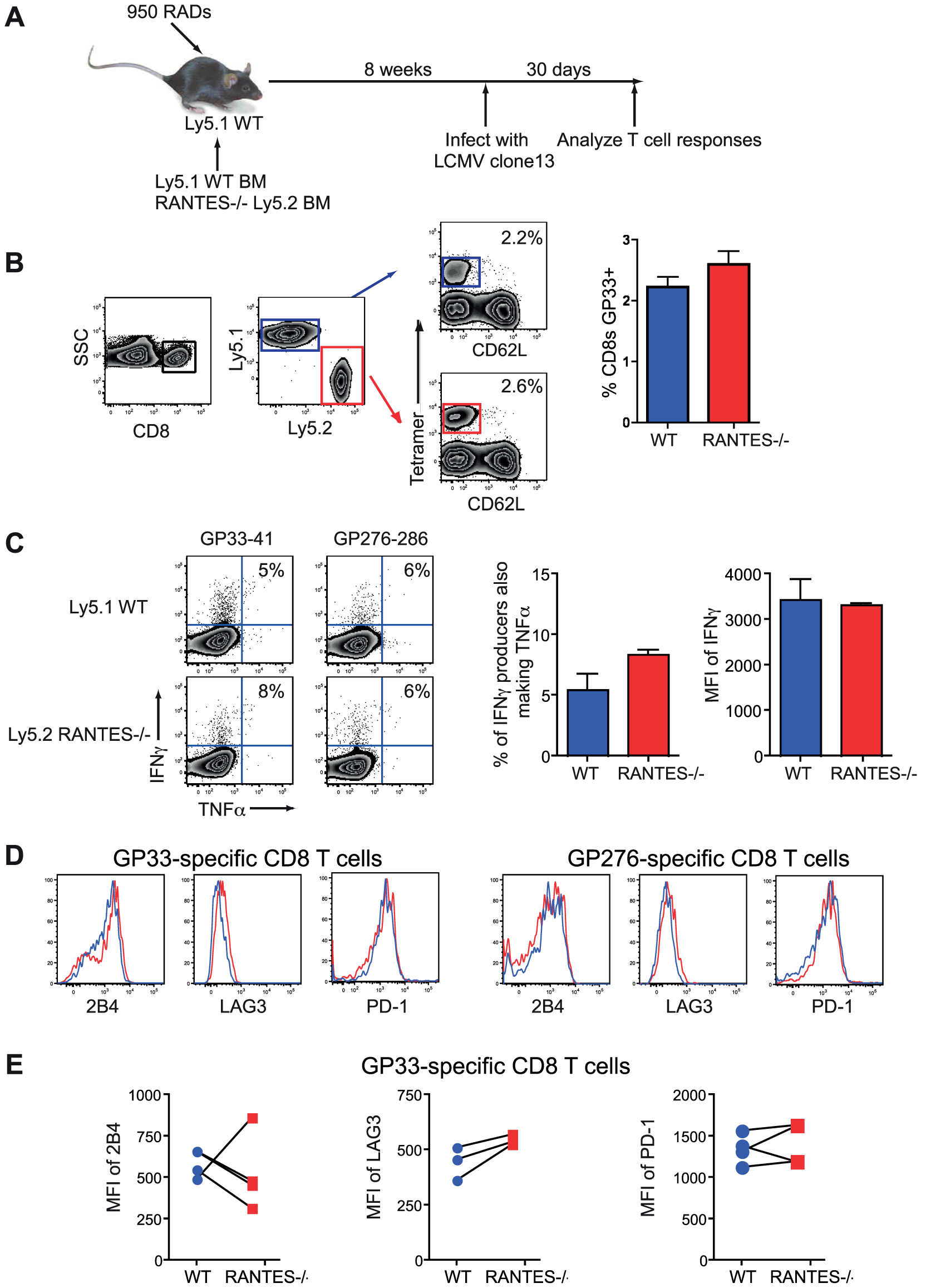 CD8 T cells do not need to produce RANTES themselves.