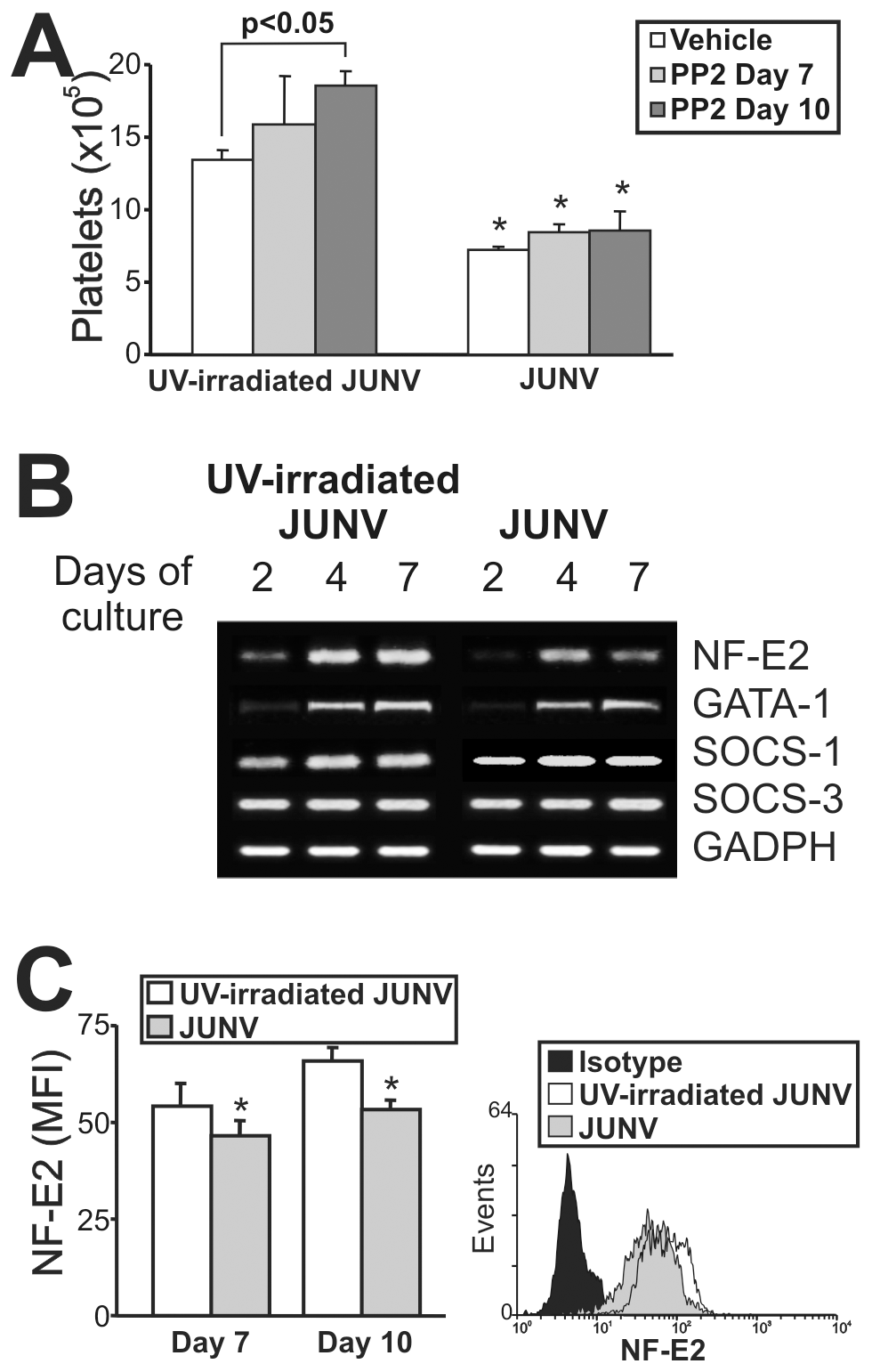 Intracellular mechanisms involved in the JUNV-induced inhibition of platelet production.