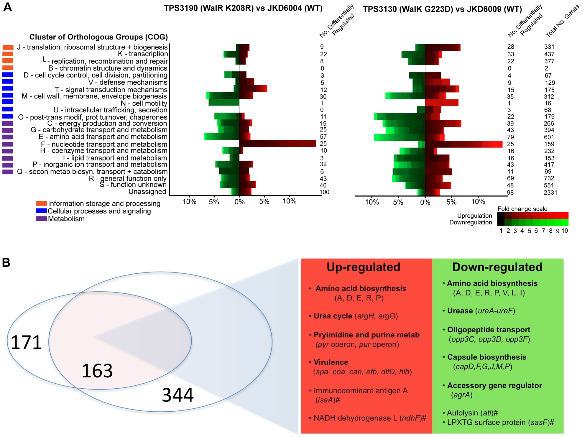 Microarray transcriptional analysis of defined WalK (G223D) and WalR (K208R) mutants compared to parental strains.