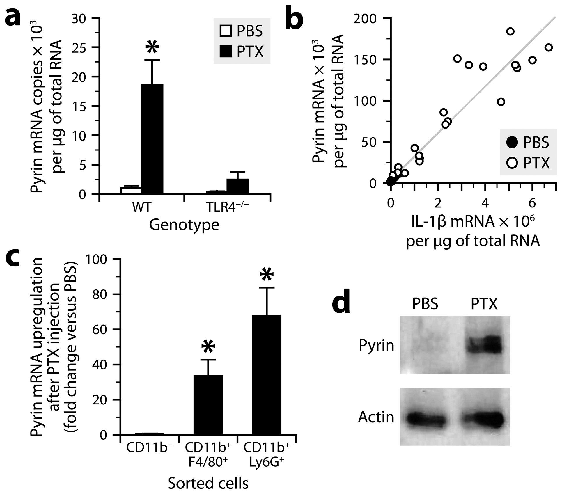 PTX increases pyrin expression in myeloid cells via a TLR4-dependent pathway.