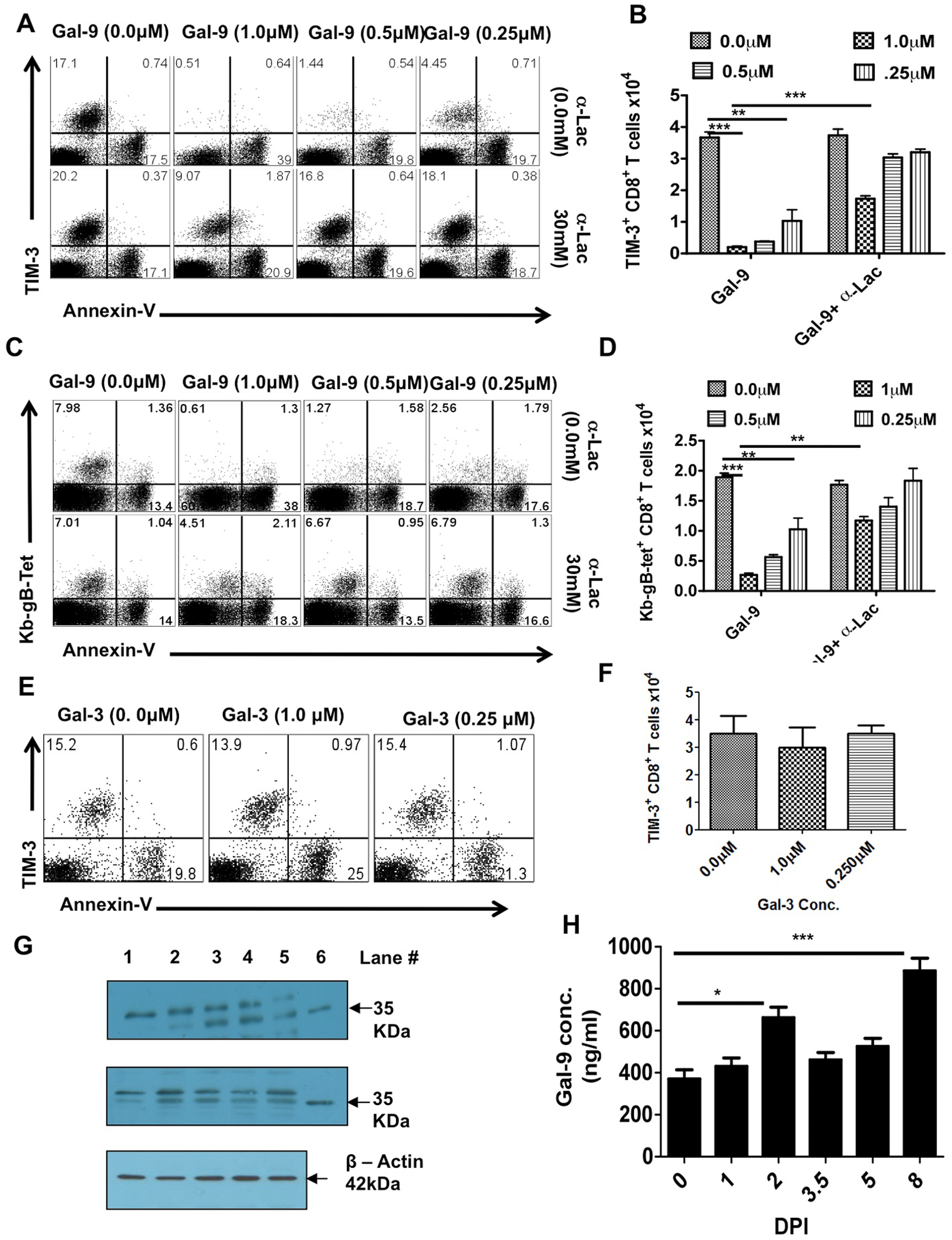 Galectin-9 induces apoptosis of TIM-3 expressing CD8<sup>+</sup> T cells in vitro and its expression is up regulated in the lymphoid organs after HSV infection.