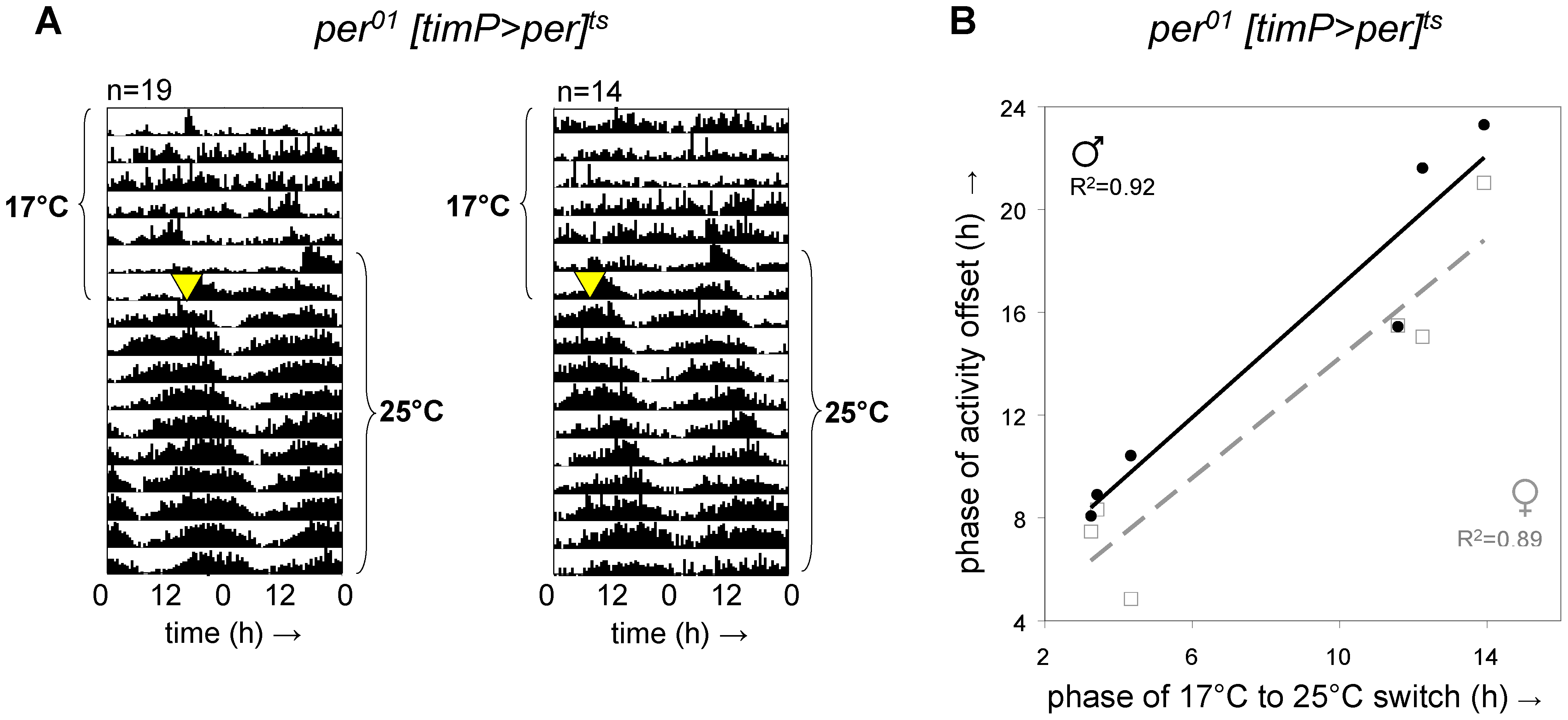 Adult circadian behavior does not require developmental rescue of <i>per<sup>01</sup></i>.