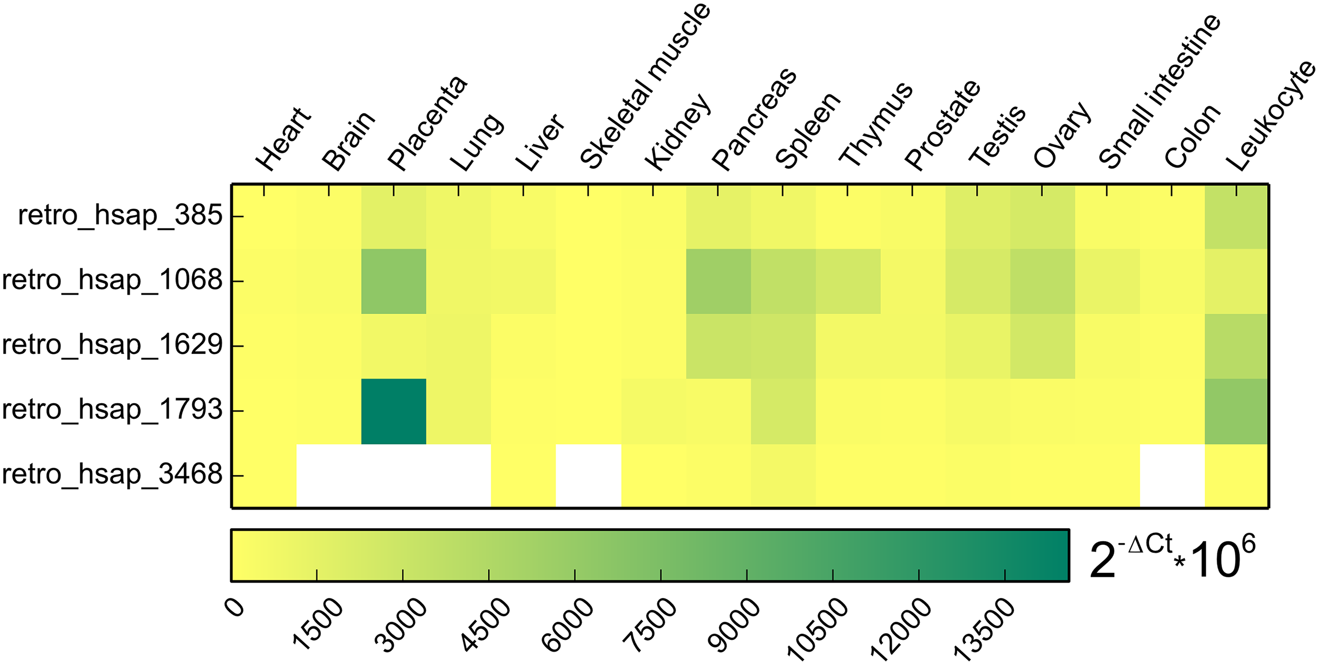 Heat map representing expression pattern of five retrogenes based on qPCR.