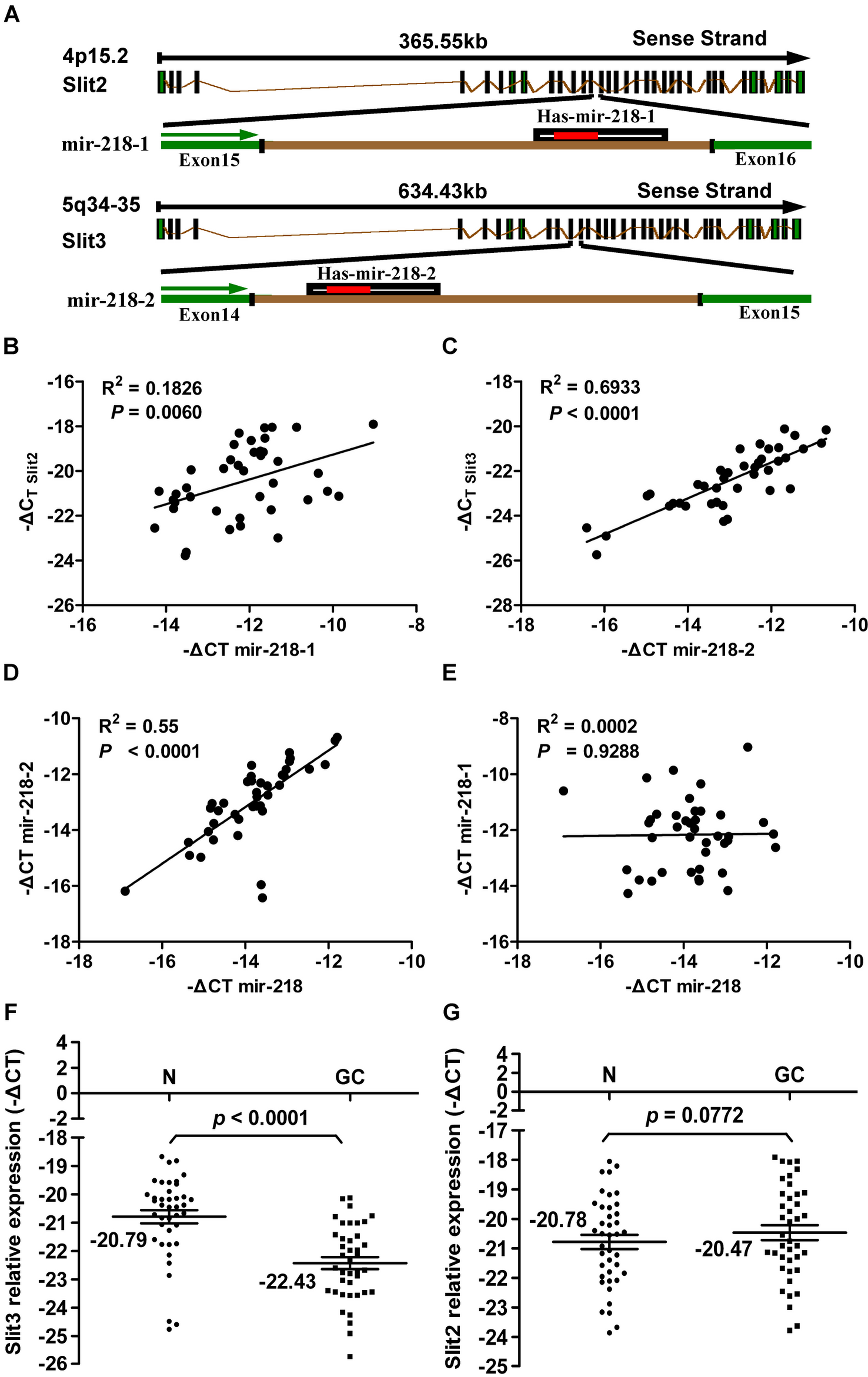 Results of the expression analysis of miR-218, miR-218-1, miR-218-2, Slit2, and Slit3 in 40 matched GC tumors and corresponding normal tissues via qRT–PCR.