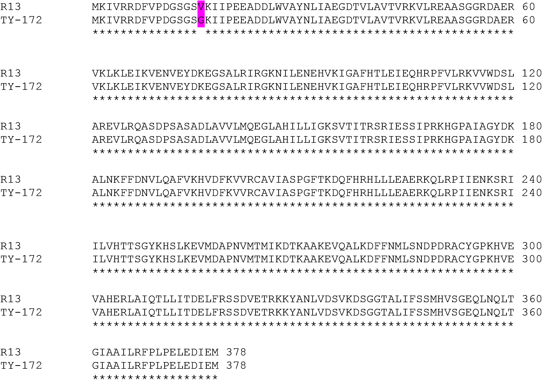 Amino-acid sequence of the <i>Pelo</i> gene in the resistant TY172 line compared to the susceptible line M-82.
